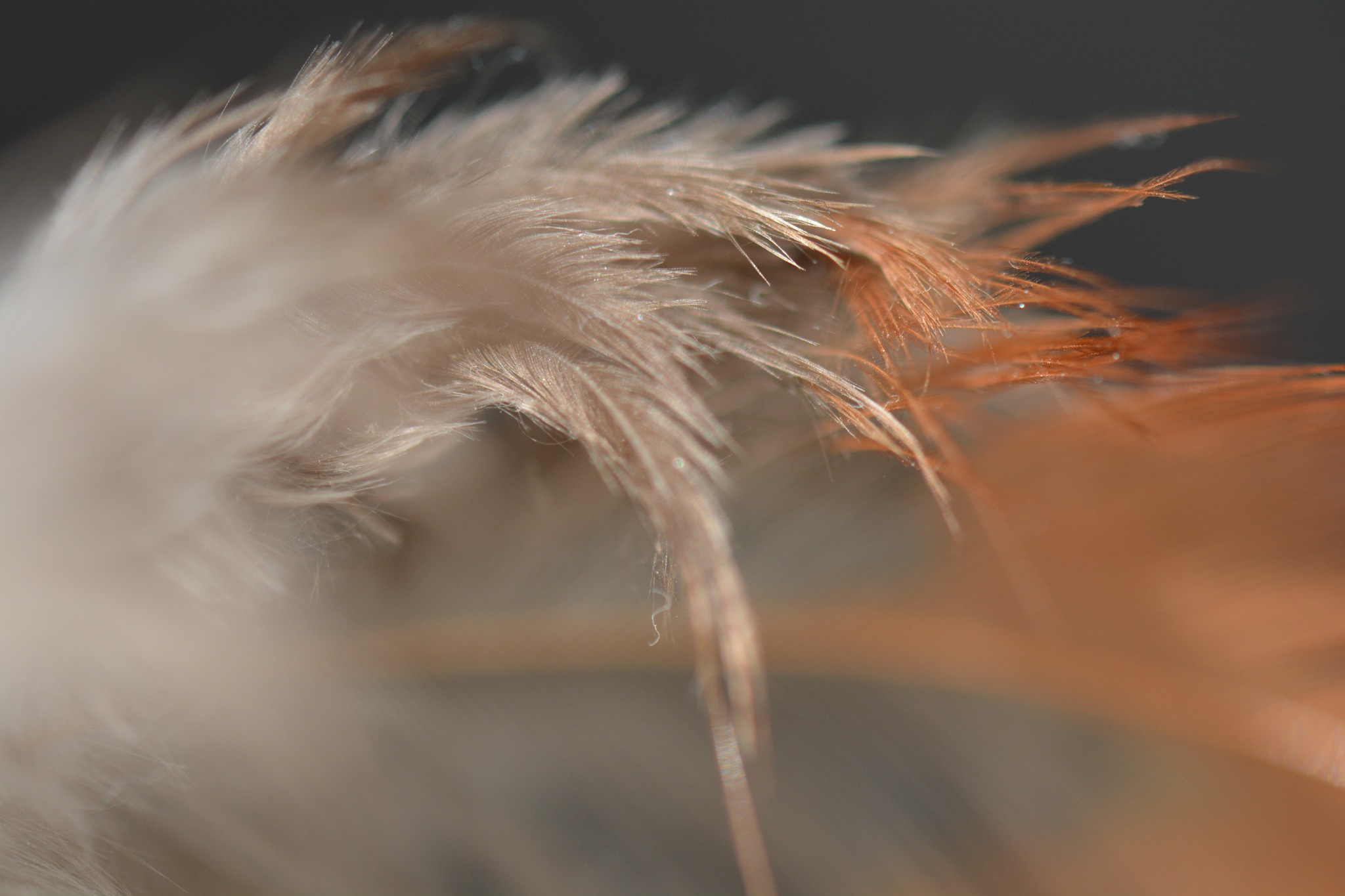 Feather Tickle 2 by photofly/Holly