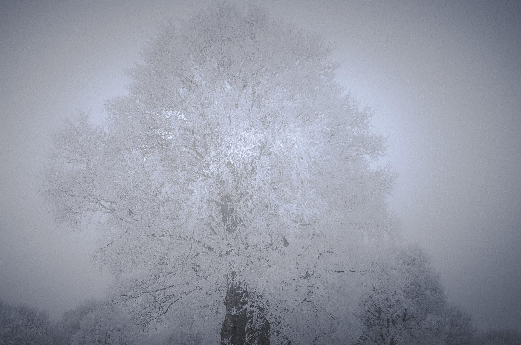 Wintertree 2 by Gerard de Haan