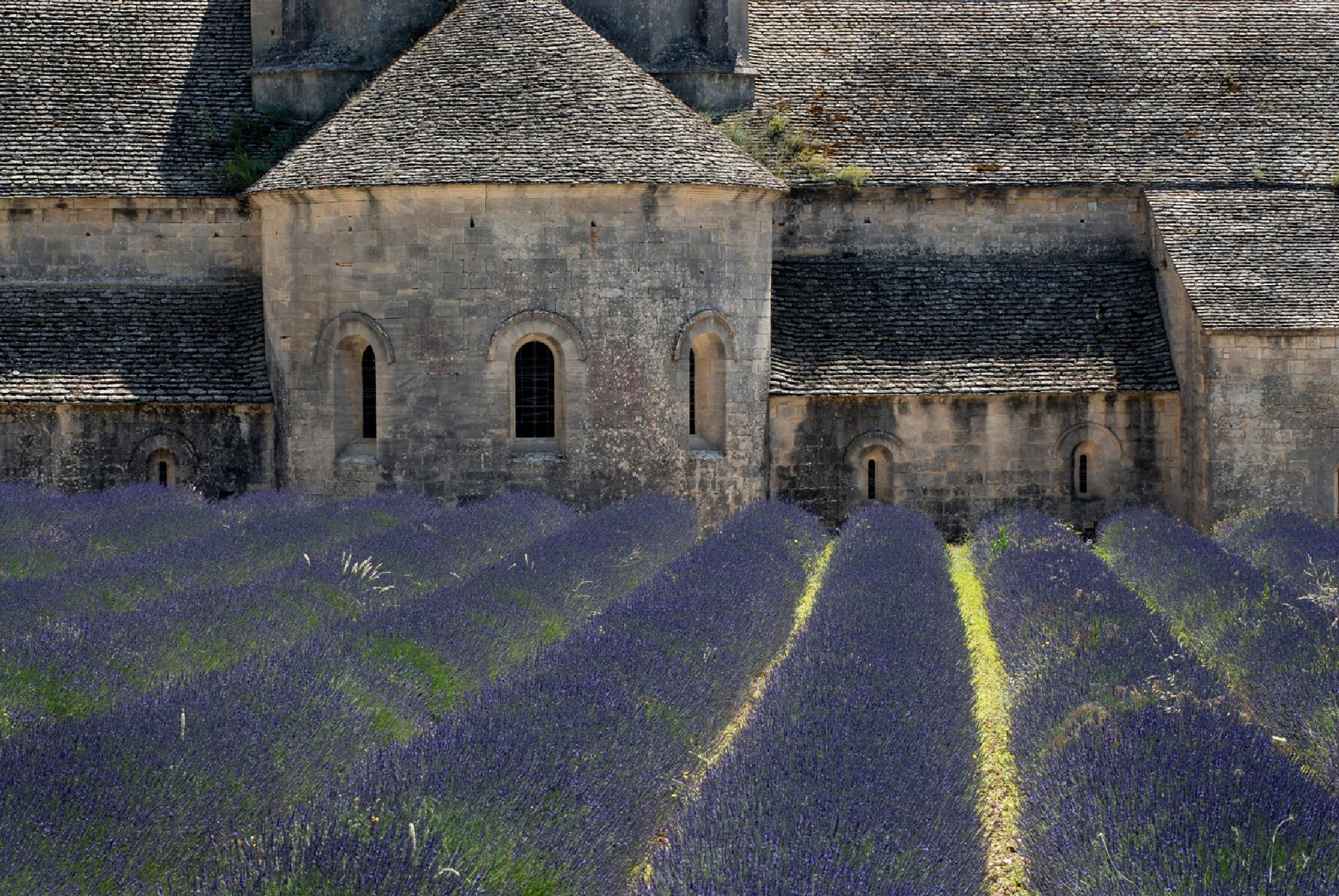 Senanque Abbey behind lavendula field by Göran Gustafson