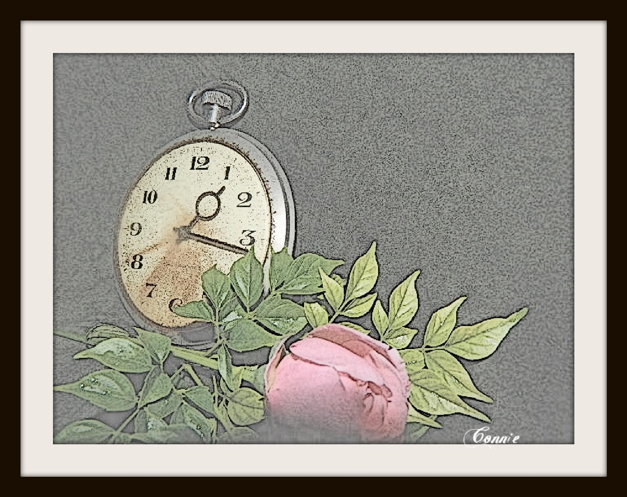 Rose time by connie