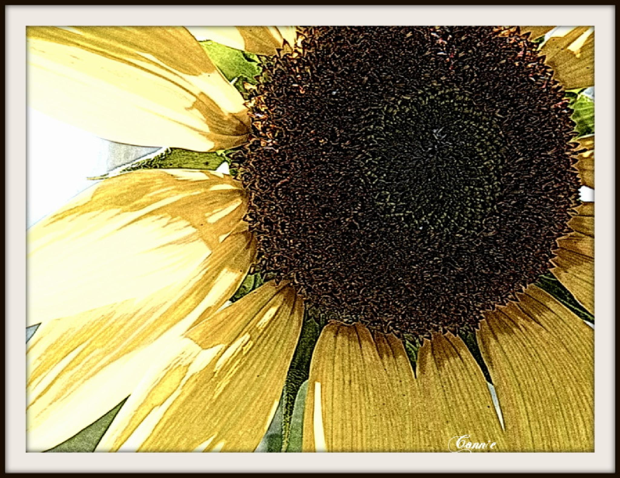 sun flower by connie