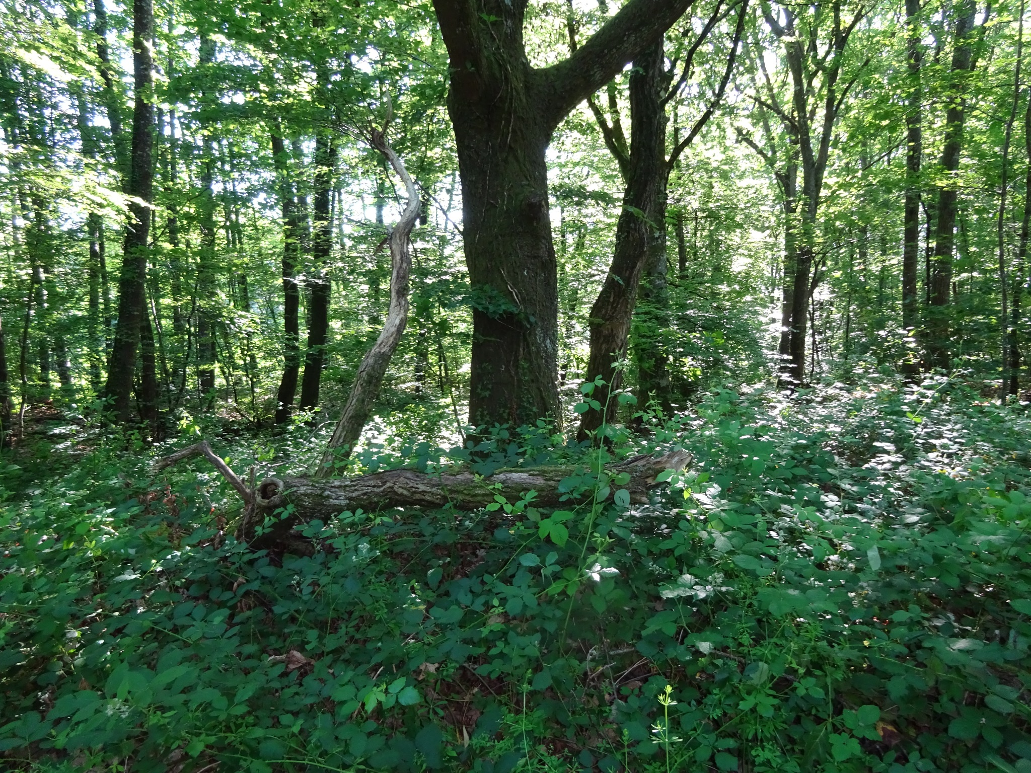 dans la verte forêt by bernadette b