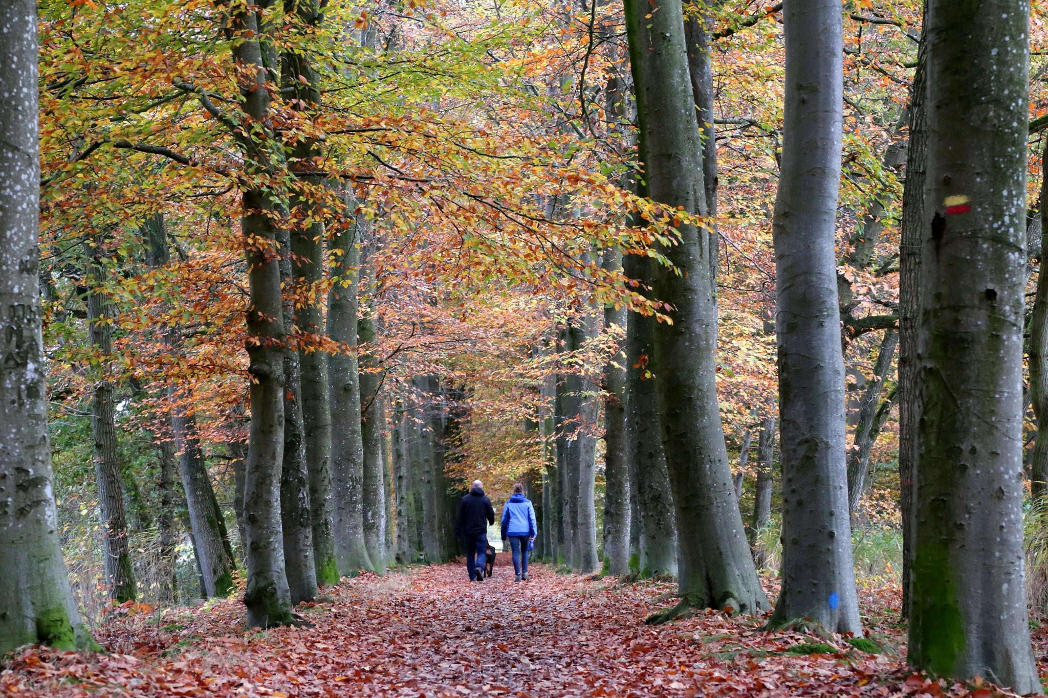Autumn walk by Sjoerd Weiland
