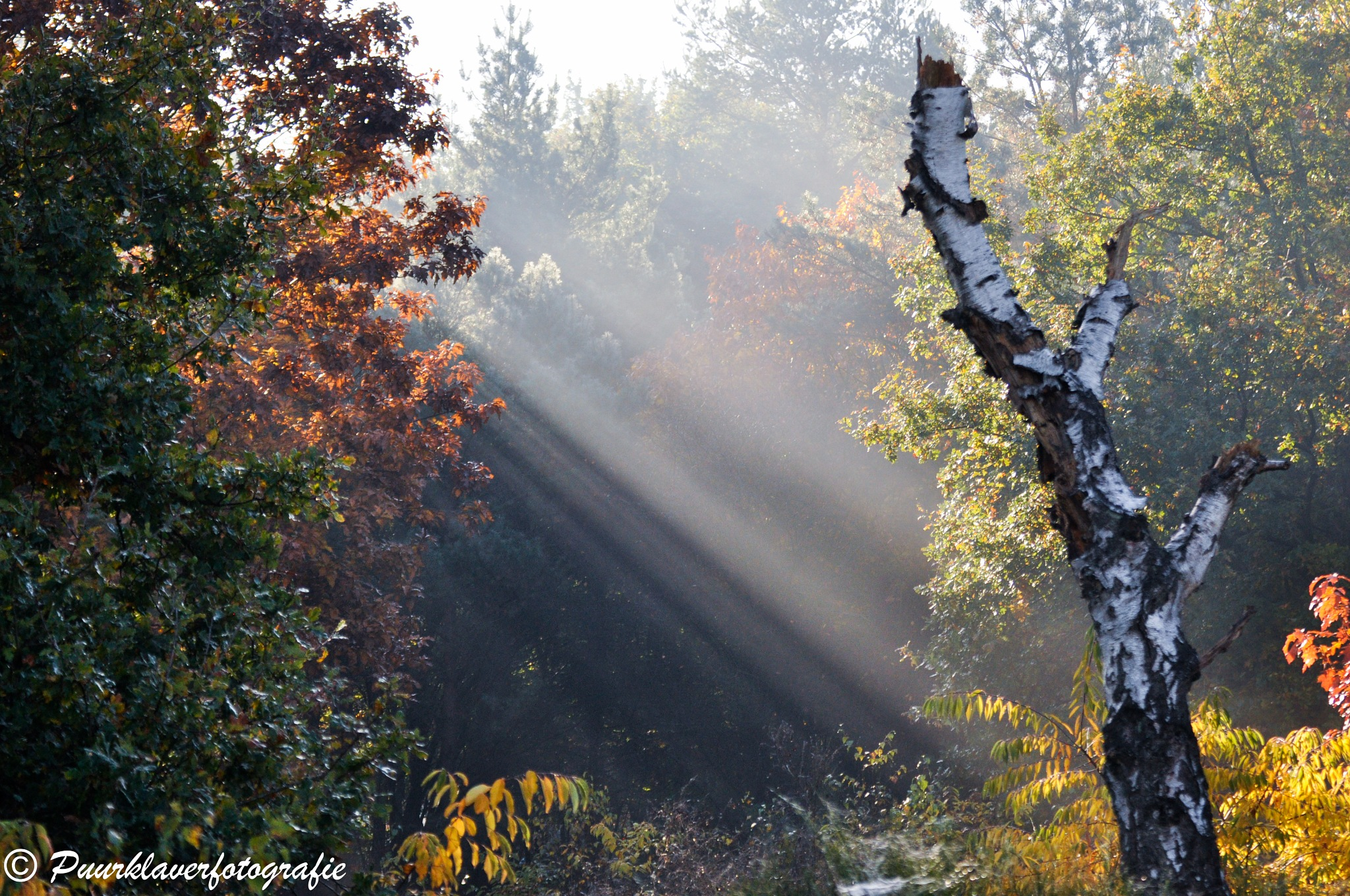 Magic in nature by Puurklaver
