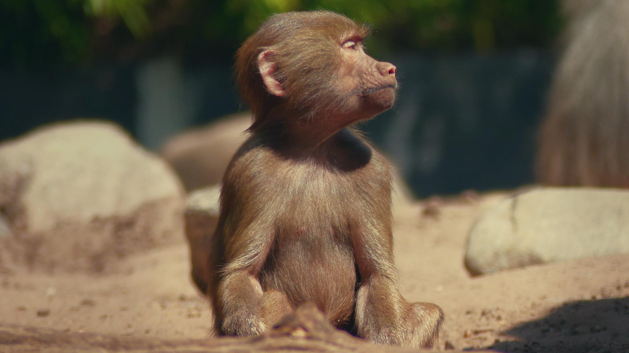 Sun Monkey by sven.kunenborg