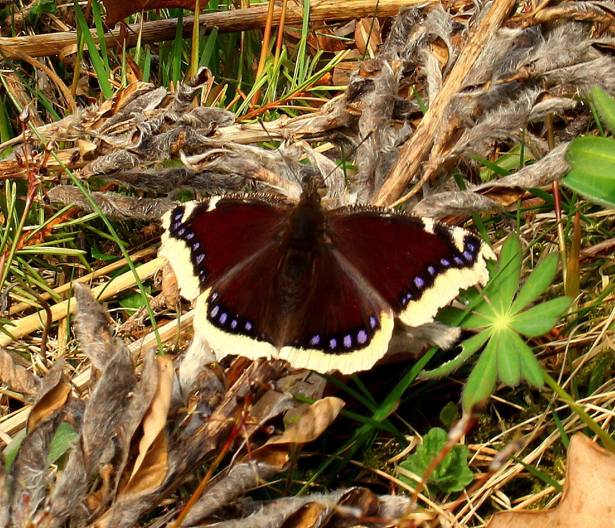 Butterfly in the garden by susannemkarlsson