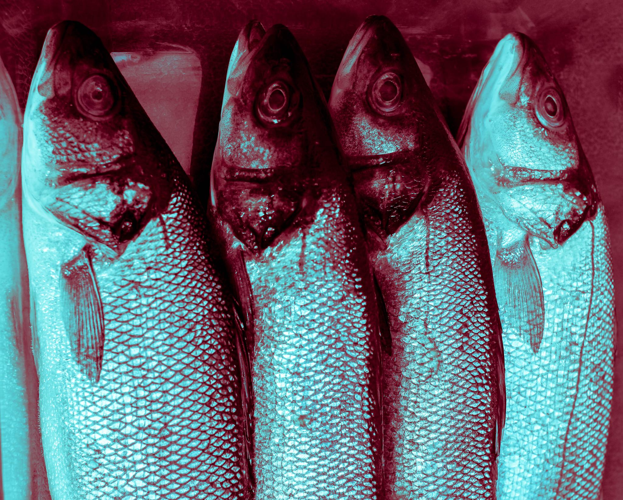 Something Fishy by bill.pritchard.581