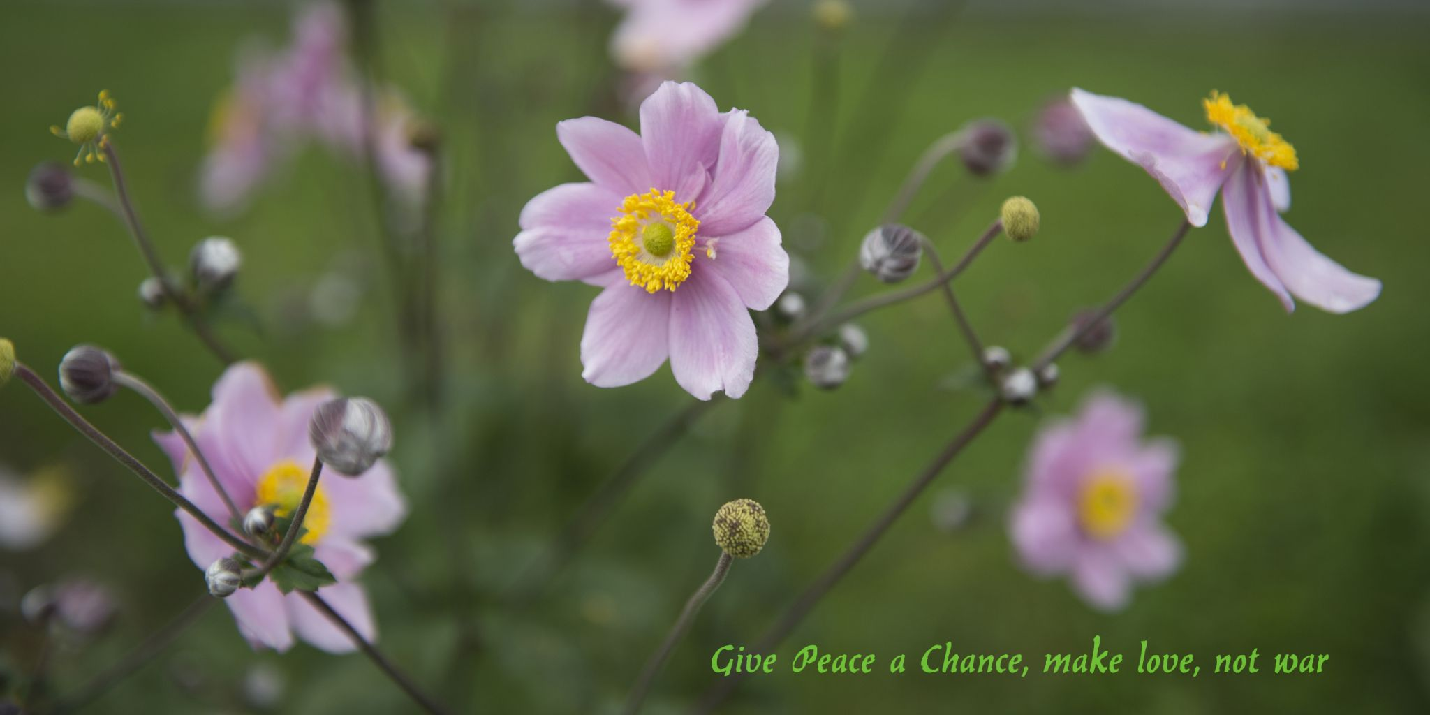 Give peace a chance by juergenfreymann