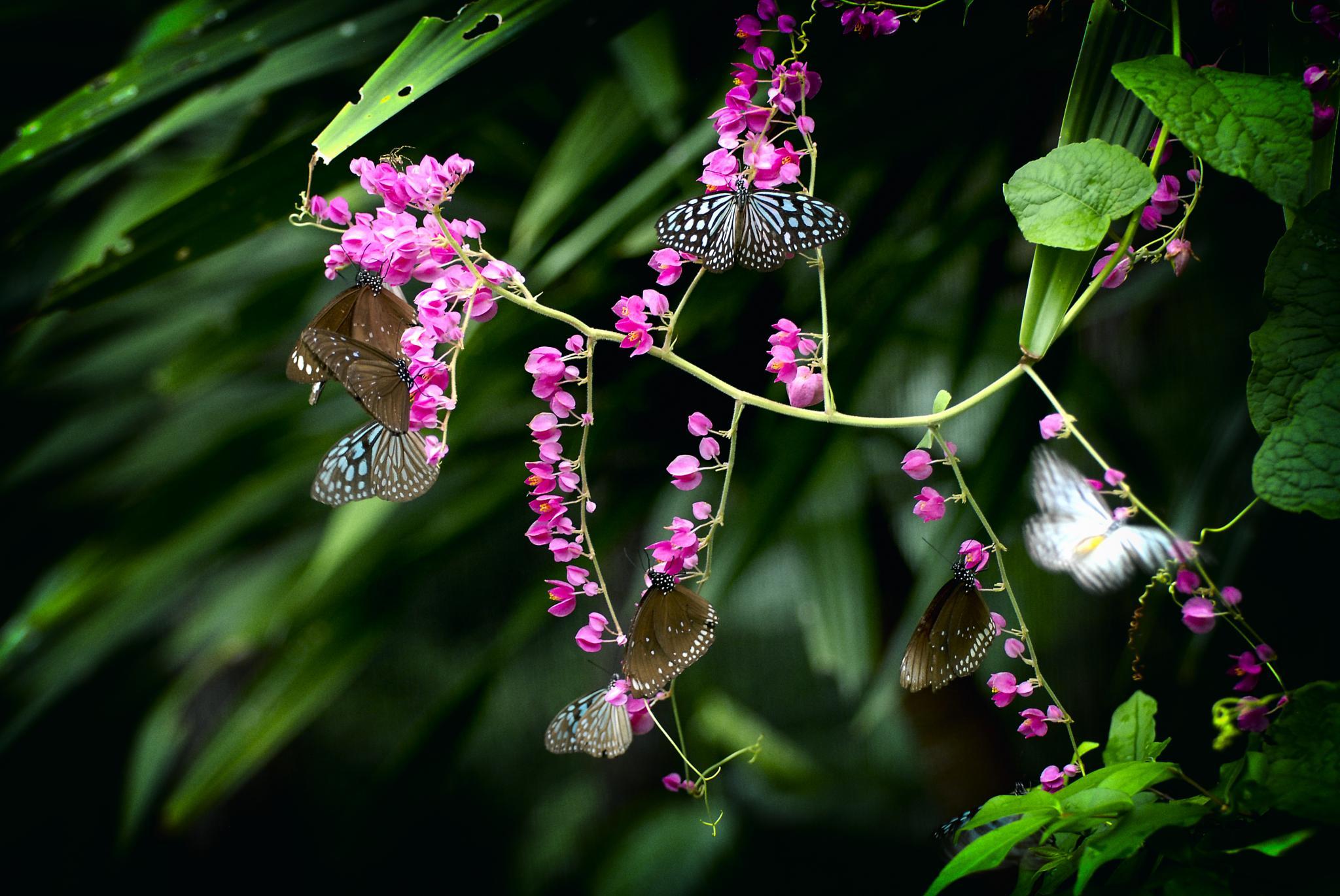 Butterflies by juergenfreymann