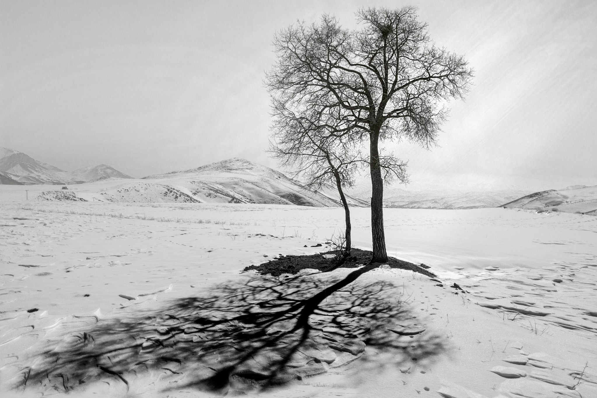 light and shadow by Hiva Maroufi