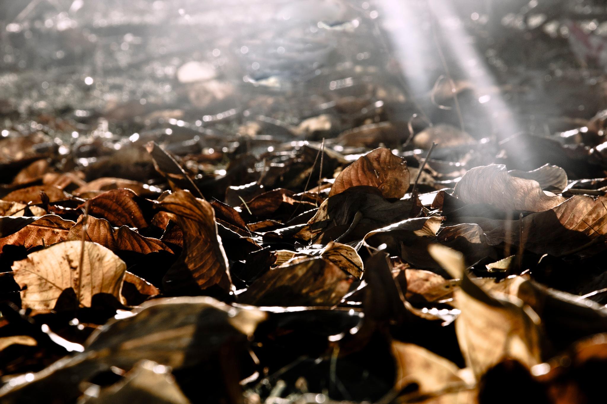 autumn by Hiva Maroufi