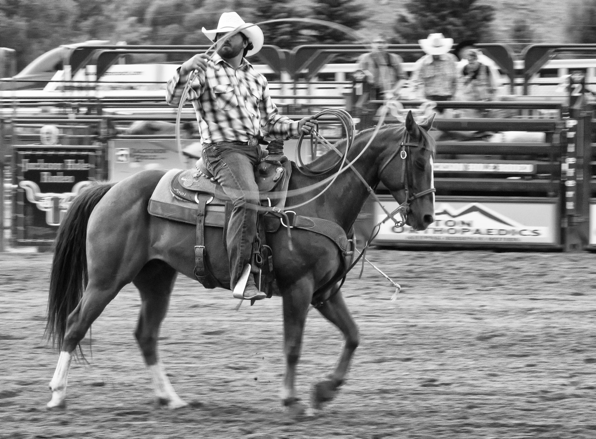 Wyoming Rodeo by Dana Scott
