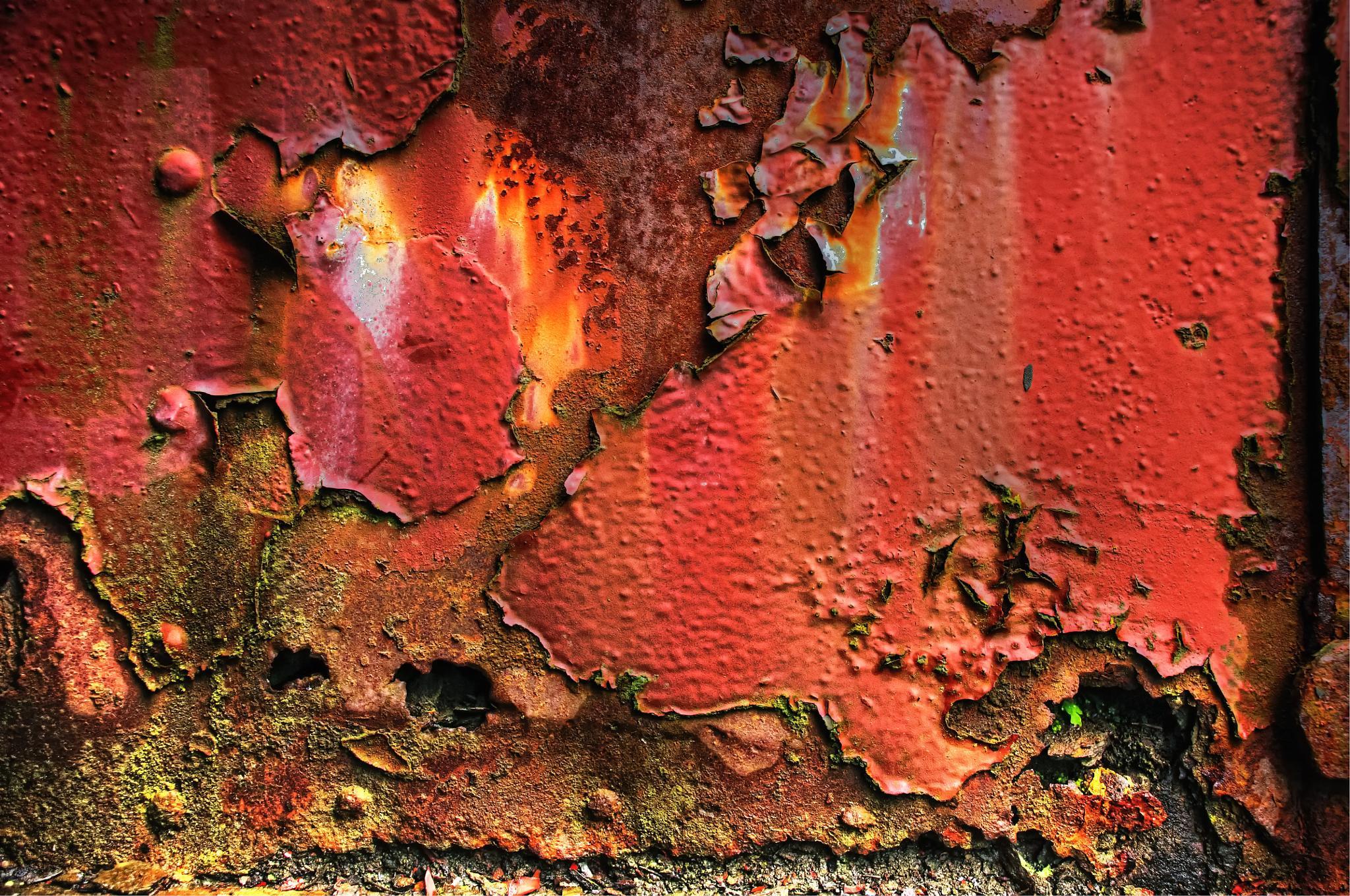 The Flame by Dana Scott