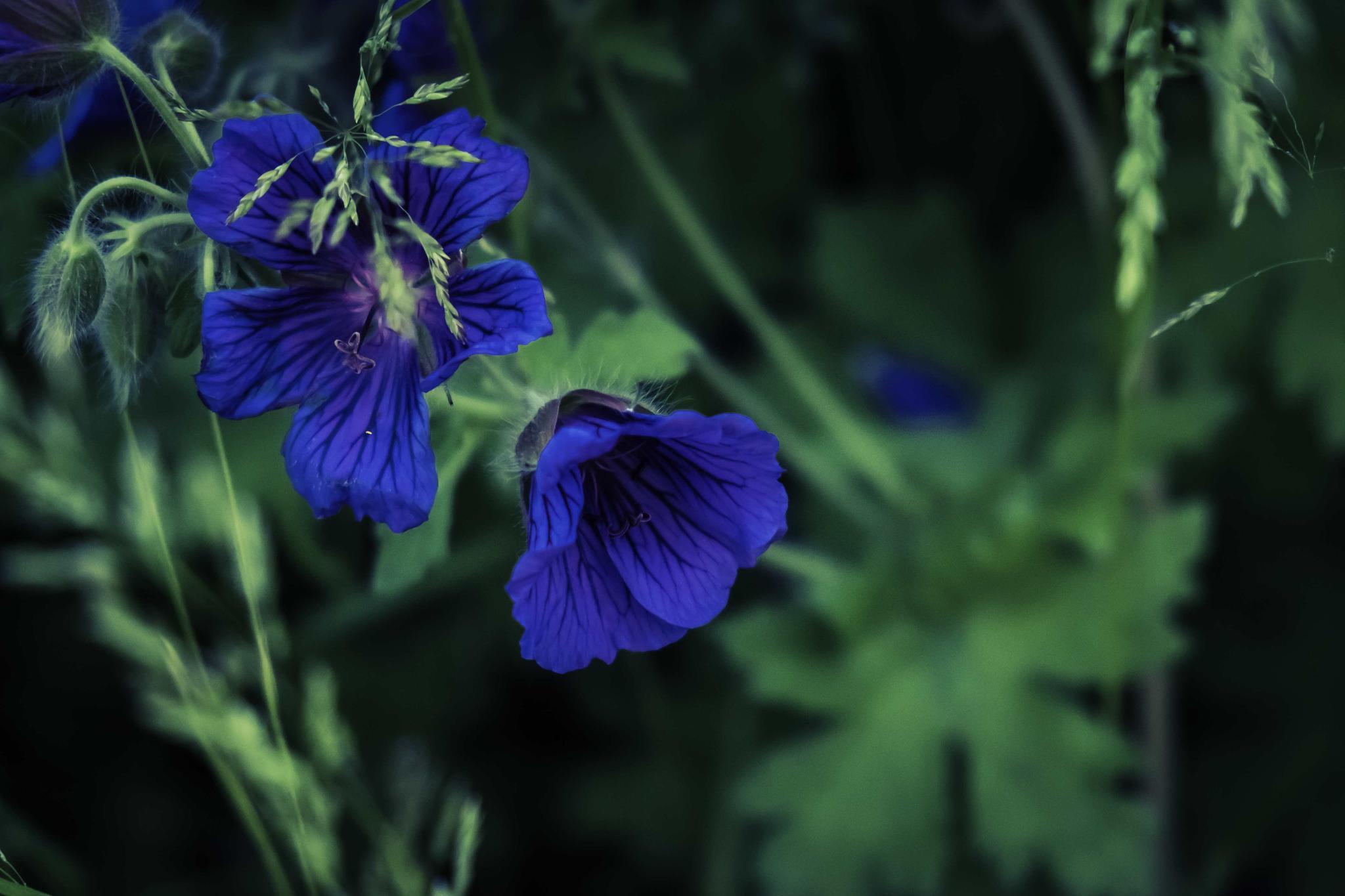 blue by mander