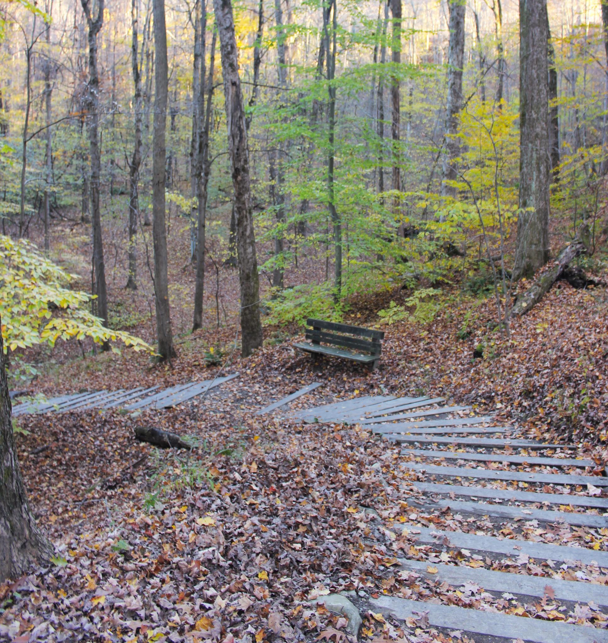 Down the path by terri.churchill1