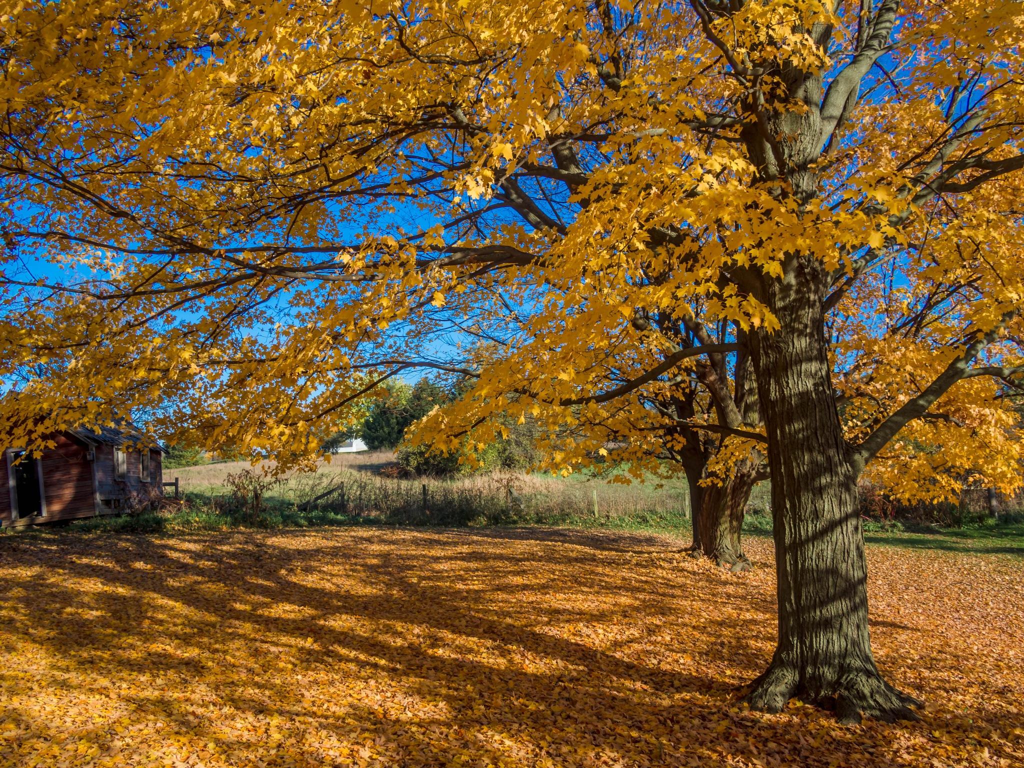 Sea of Leaves by Al