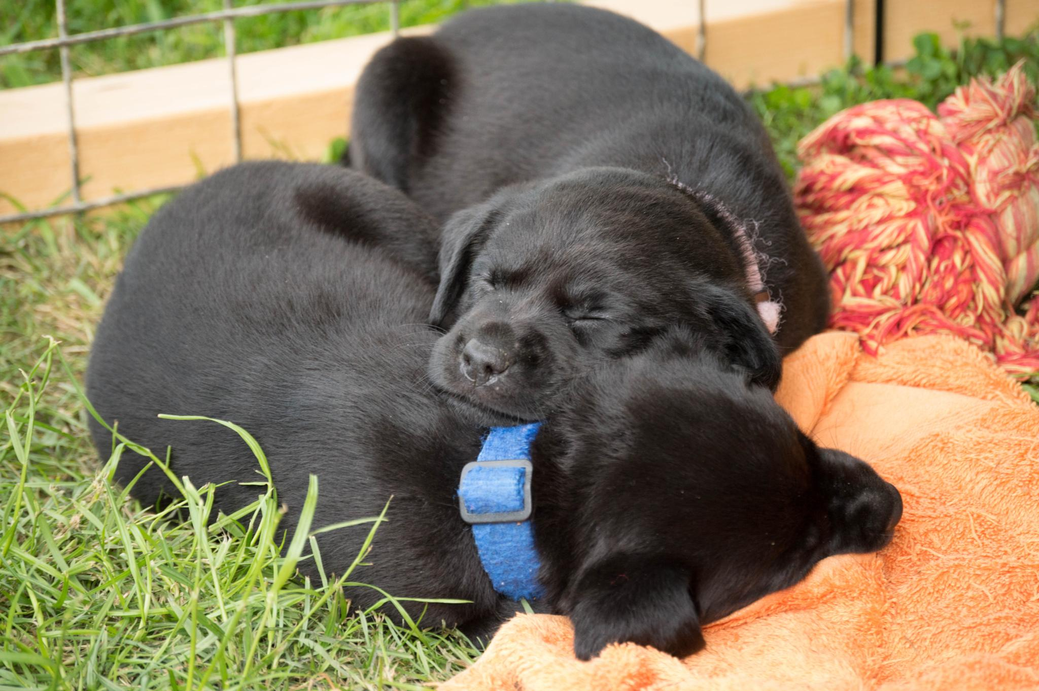 Sleeping Puppies by Jockomorrocco