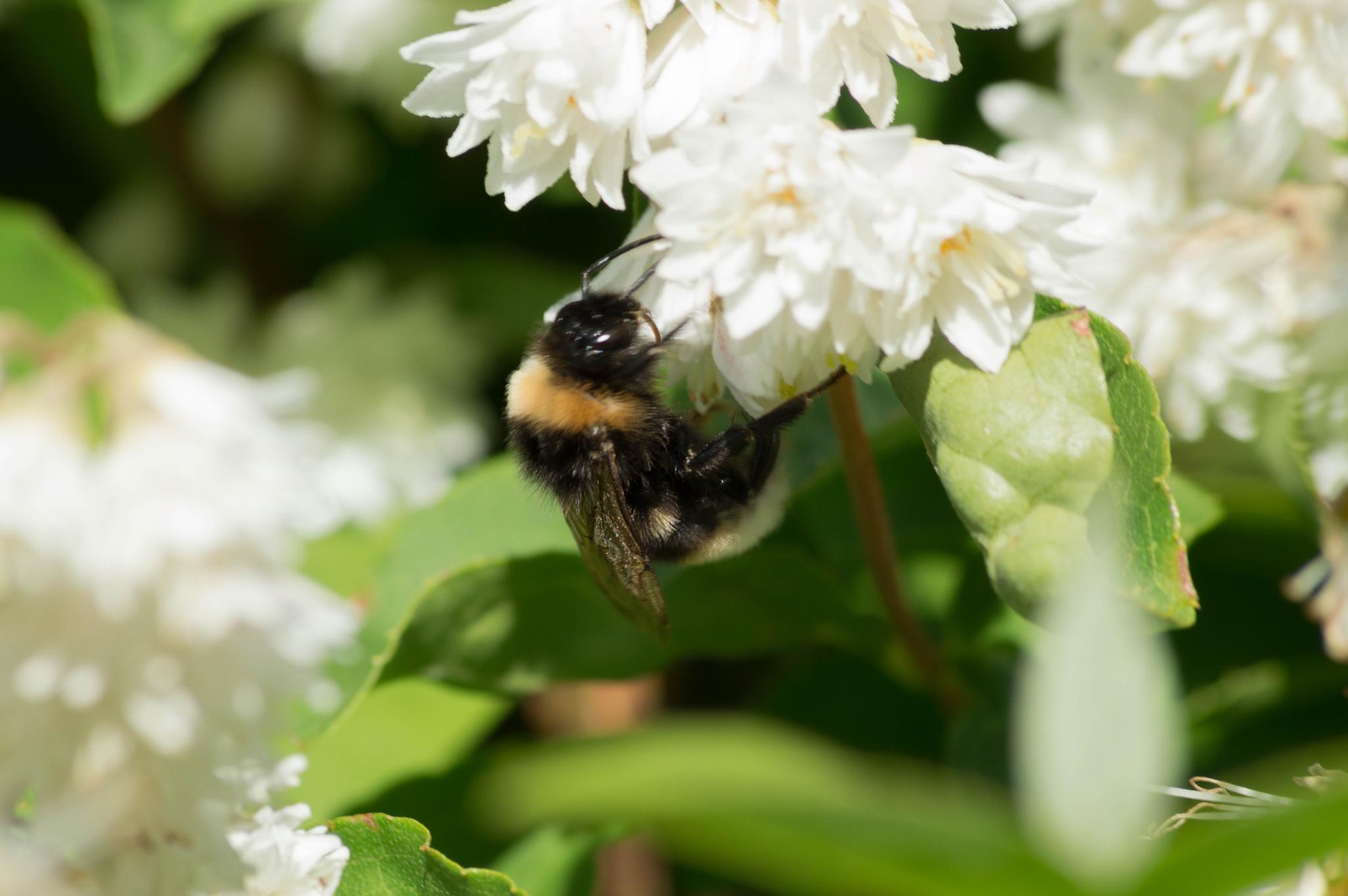 Bee on a bush by Jockomorrocco