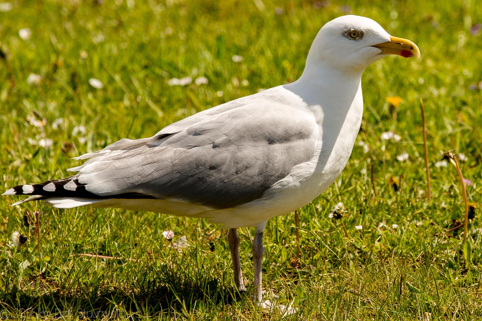 Bird by Jan Dirk Stuurwold