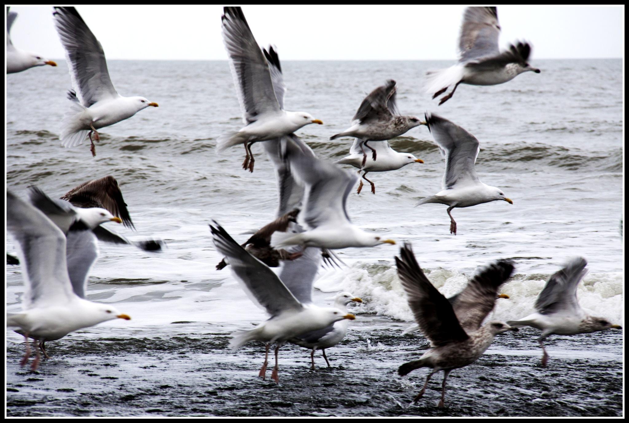 birds by johan.warta