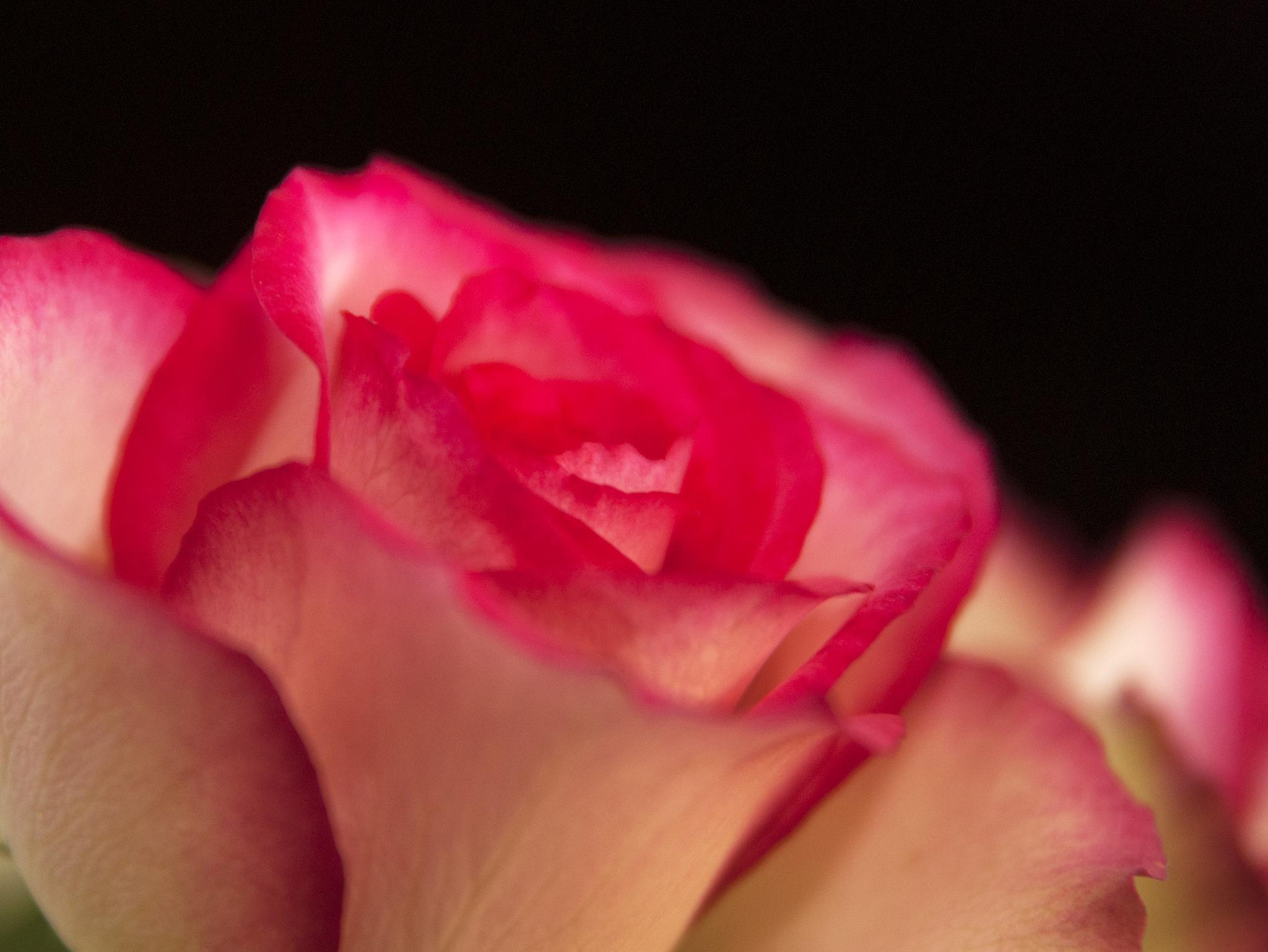 rose by p2v
