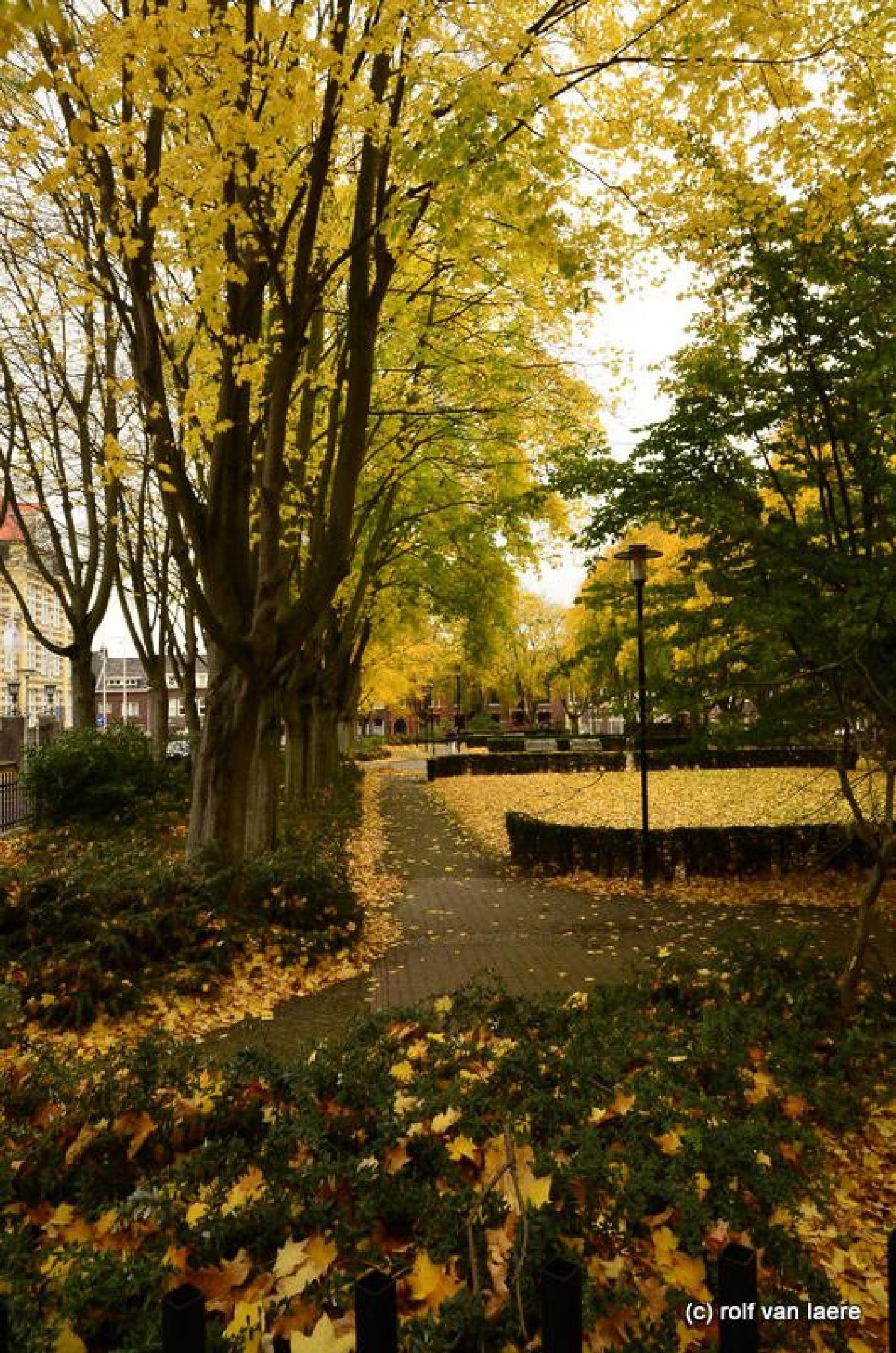 Photo in Landscape #fall #leafs #yellow #heerlen