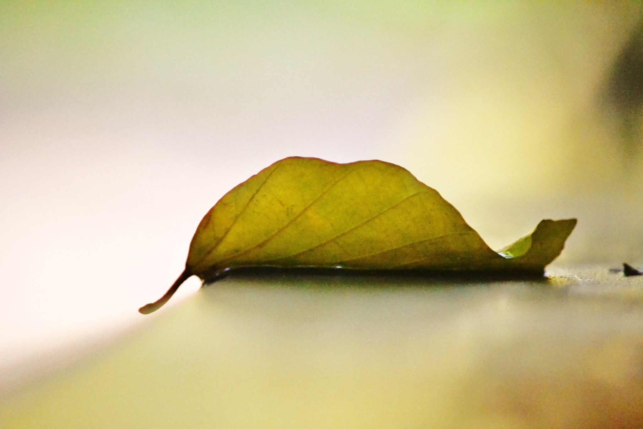 Side of leave by kathycamirephotogallery