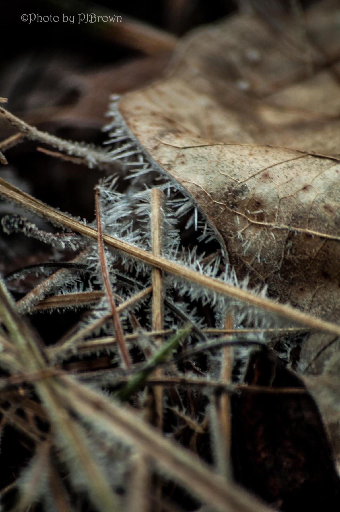Amazing hoar frost by revpaulvet