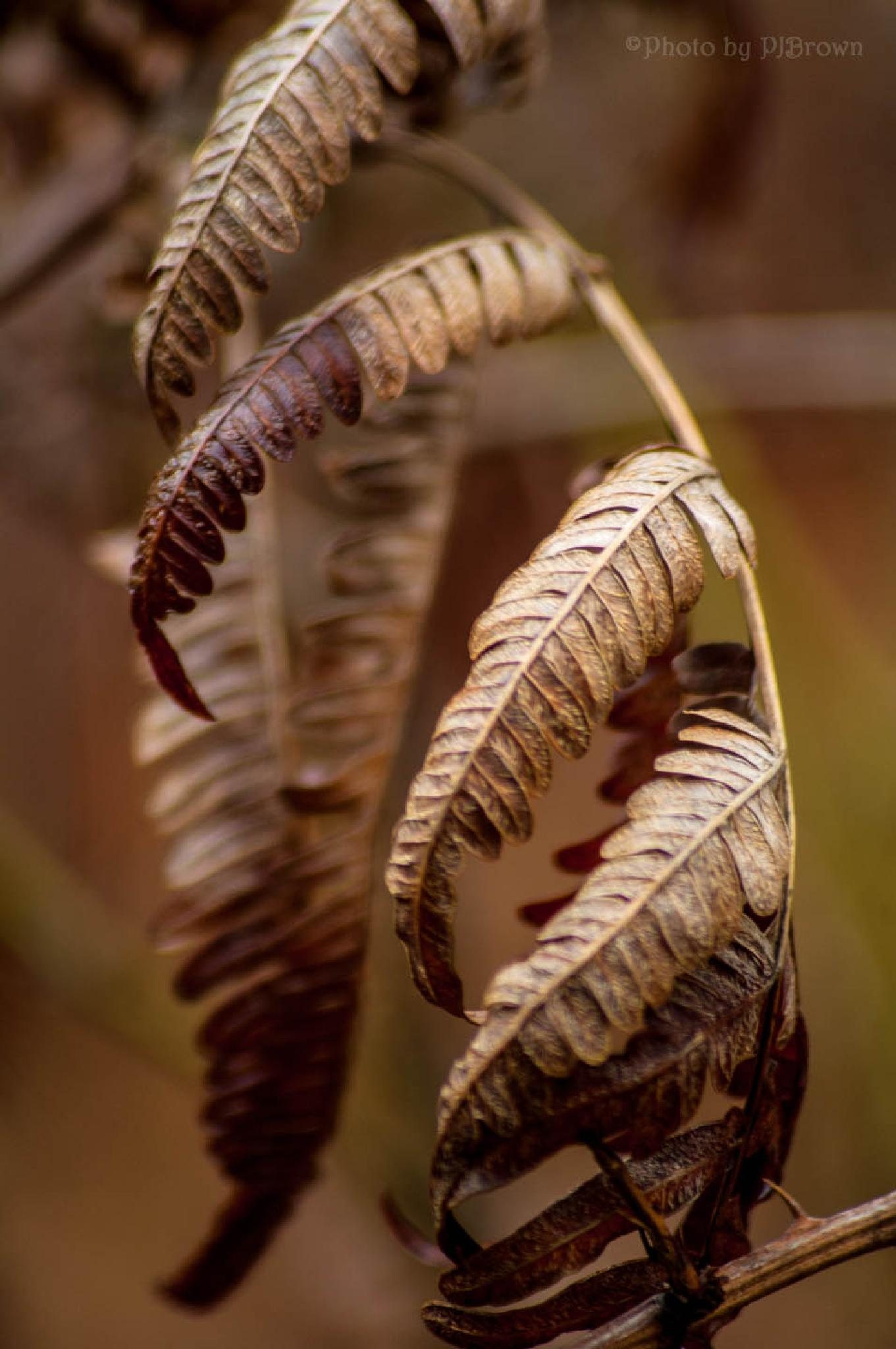 Colors and Texture - Fern Fronds by revpaulvet