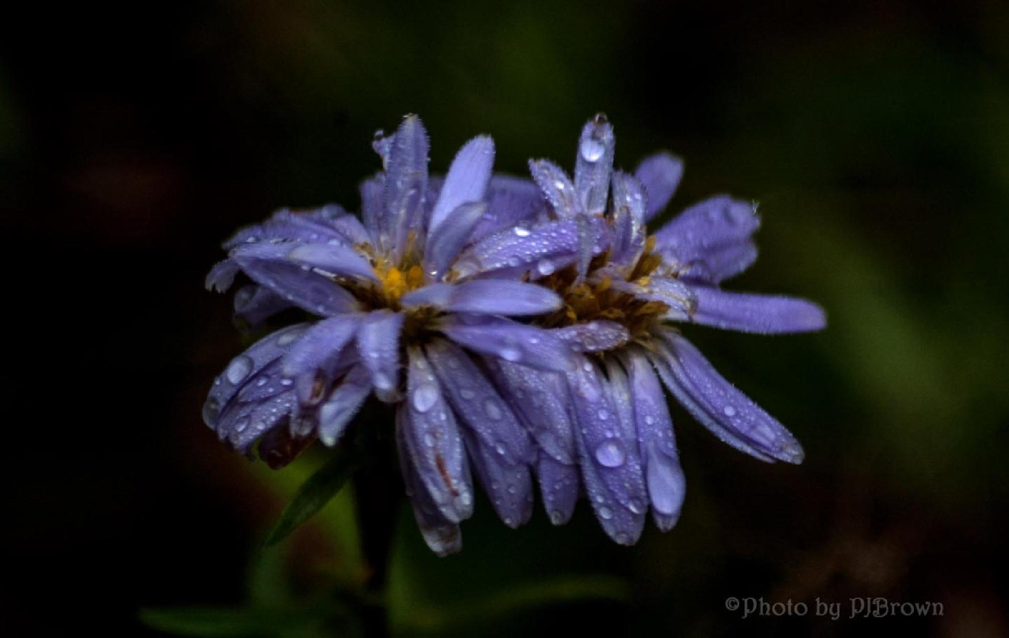 Recent rains by revpaulvet