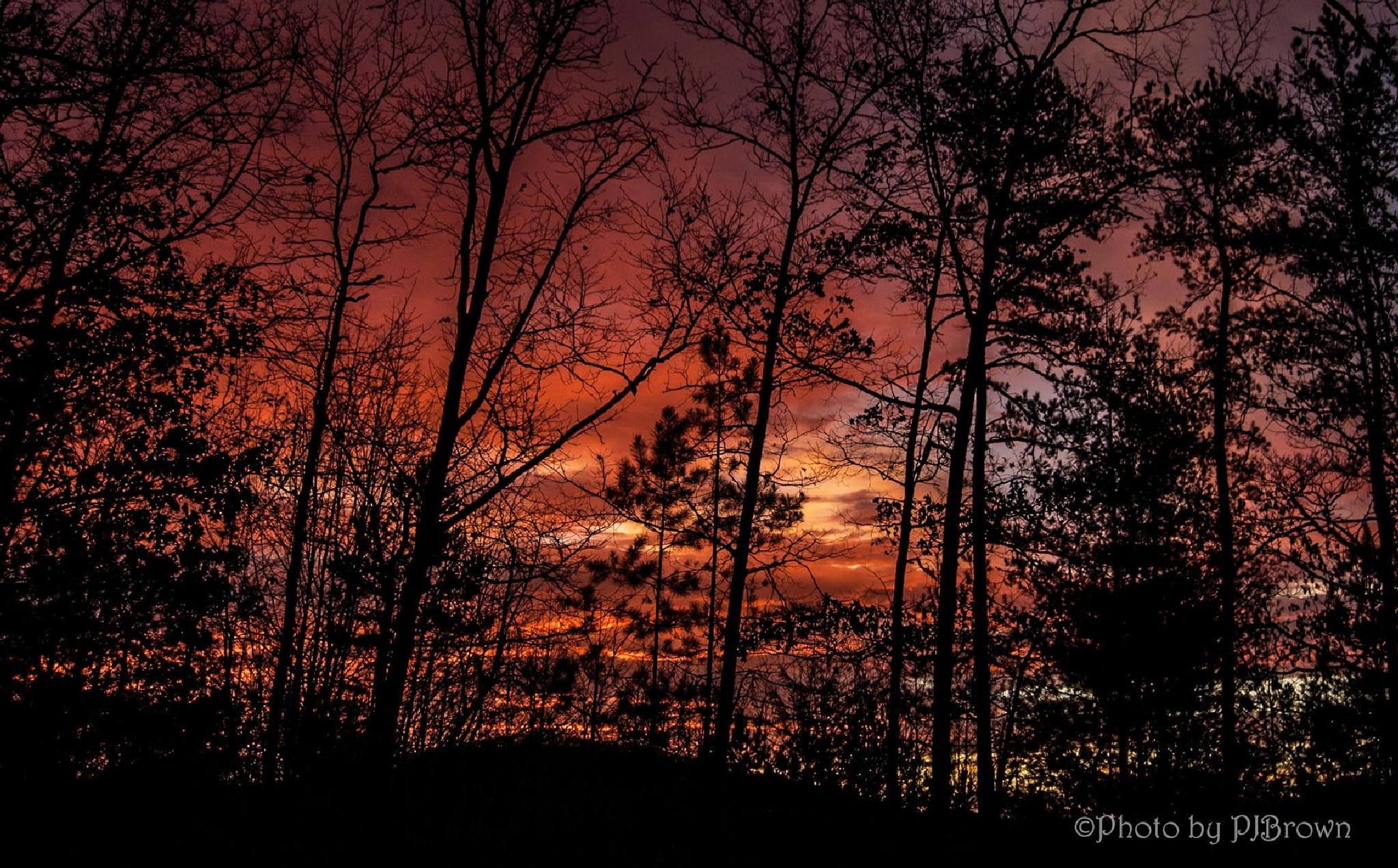 Morning color! by revpaulvet