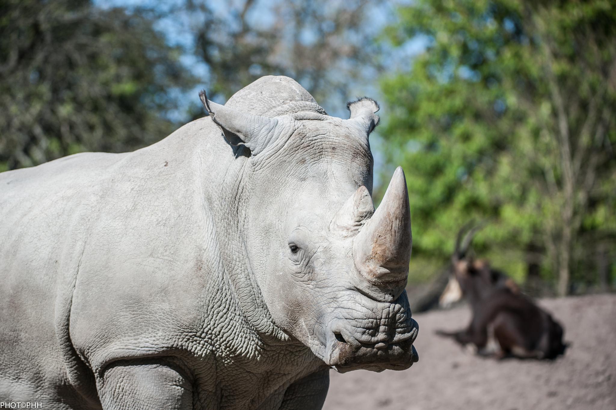 Rhinoceros by PHOTOPHH.1