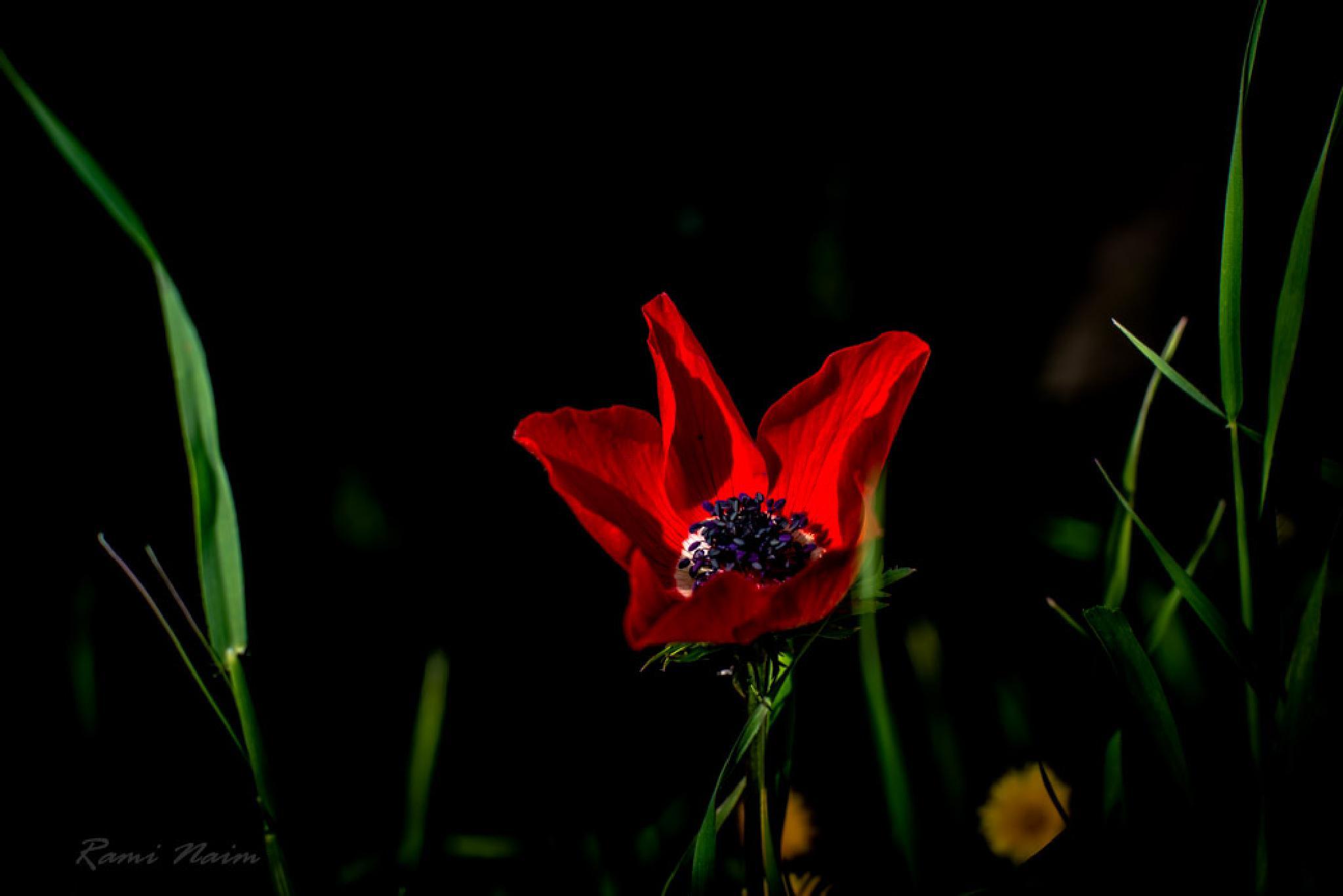 Soft heart by raminaim