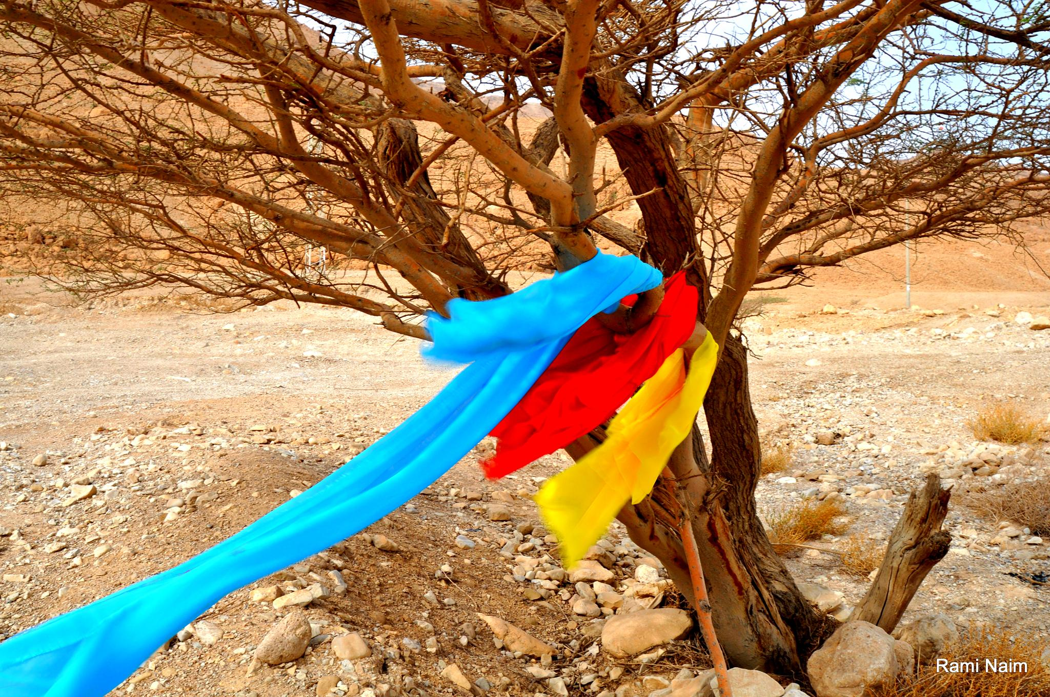 Joy of trees Dead Sea by raminaim
