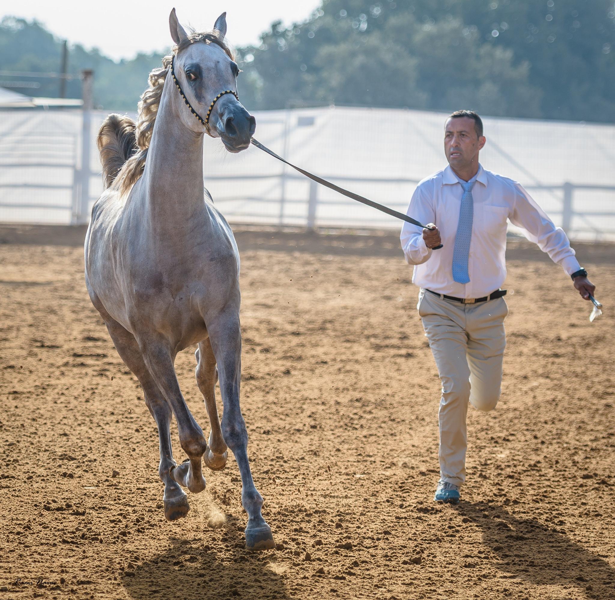 Horse and Rider by raminaim
