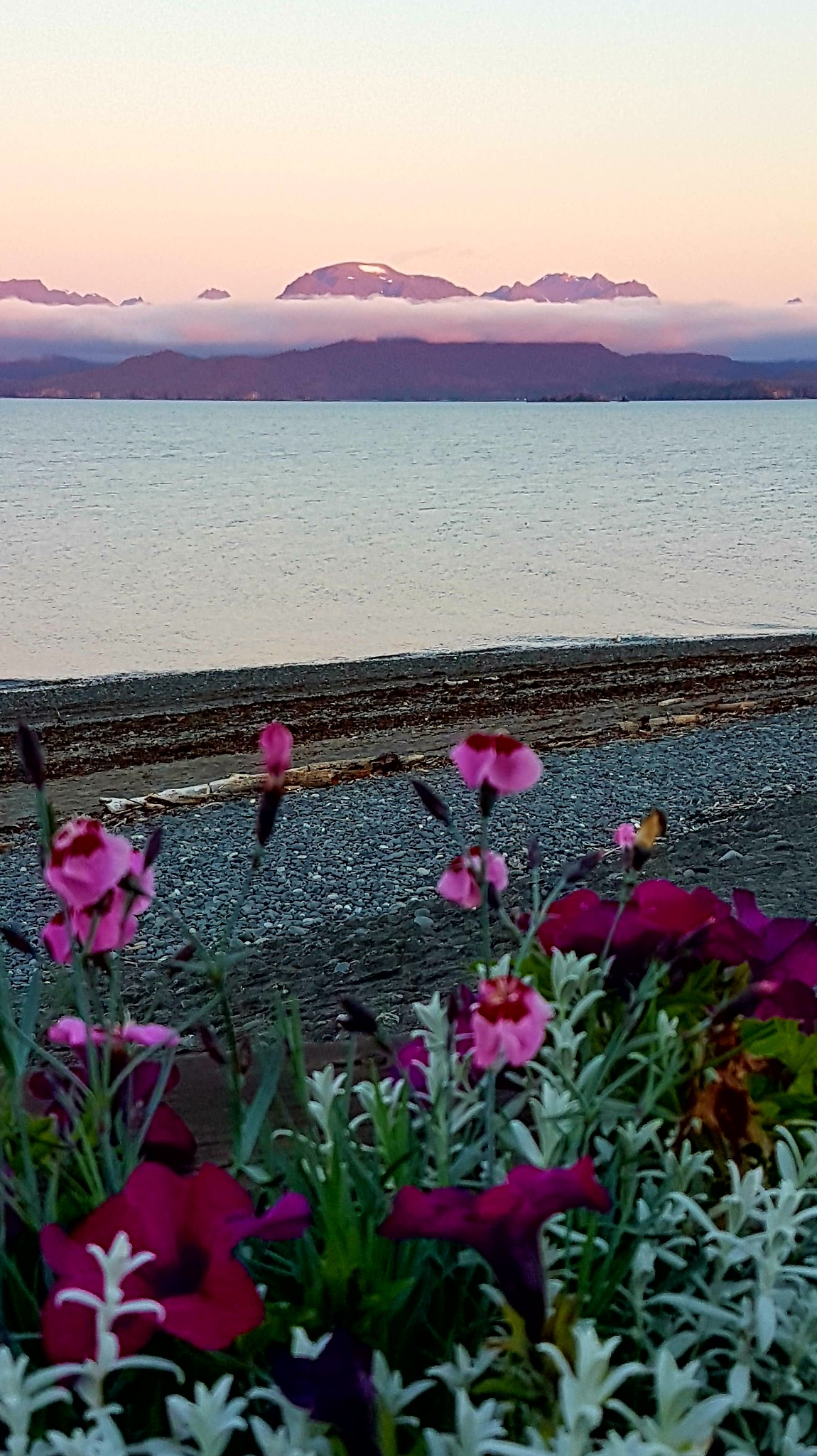 Purple Mountains and Flowers... by teresa.thiele1