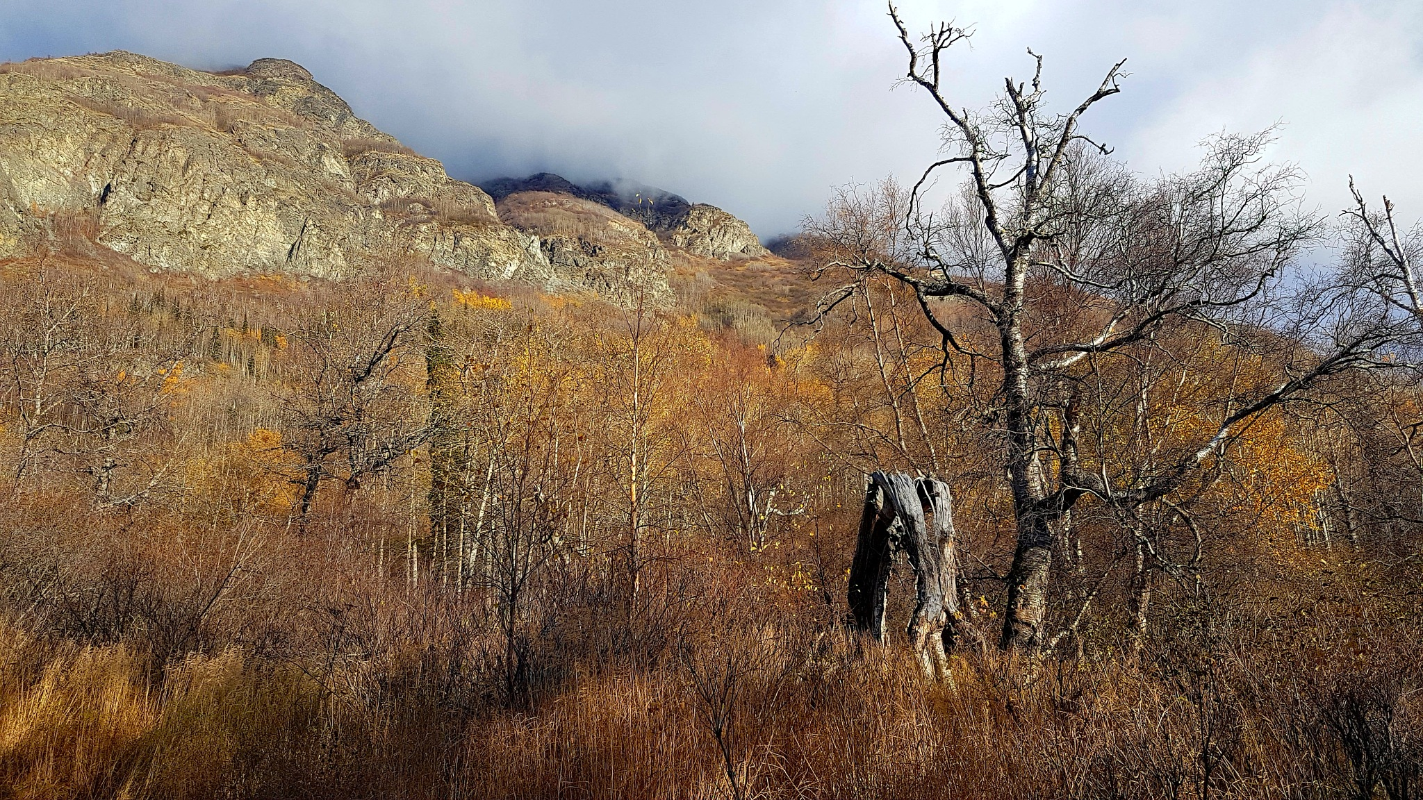 Tree and Mountains... by teresa.thiele1