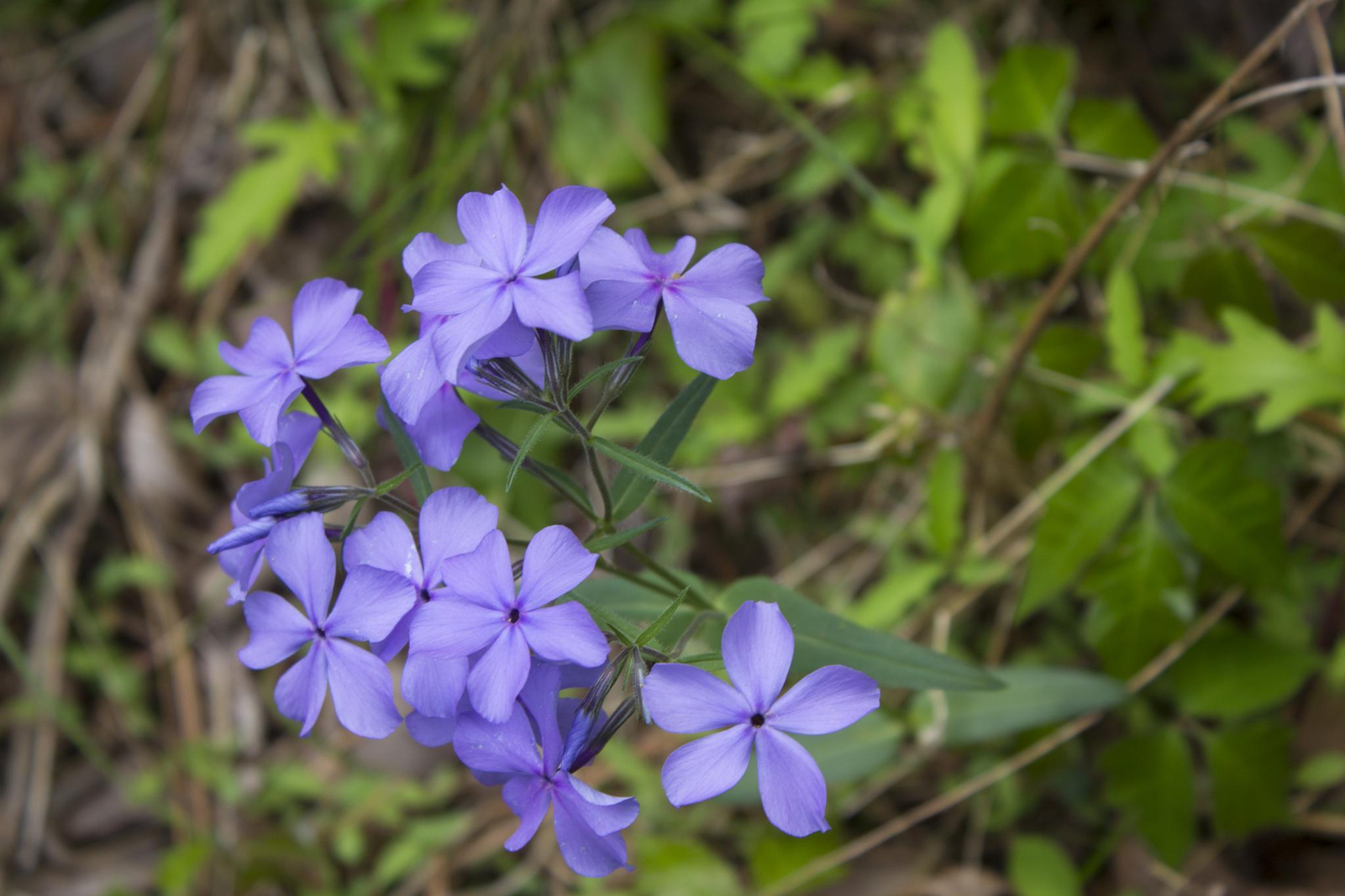 Purple wildflowers by steve house