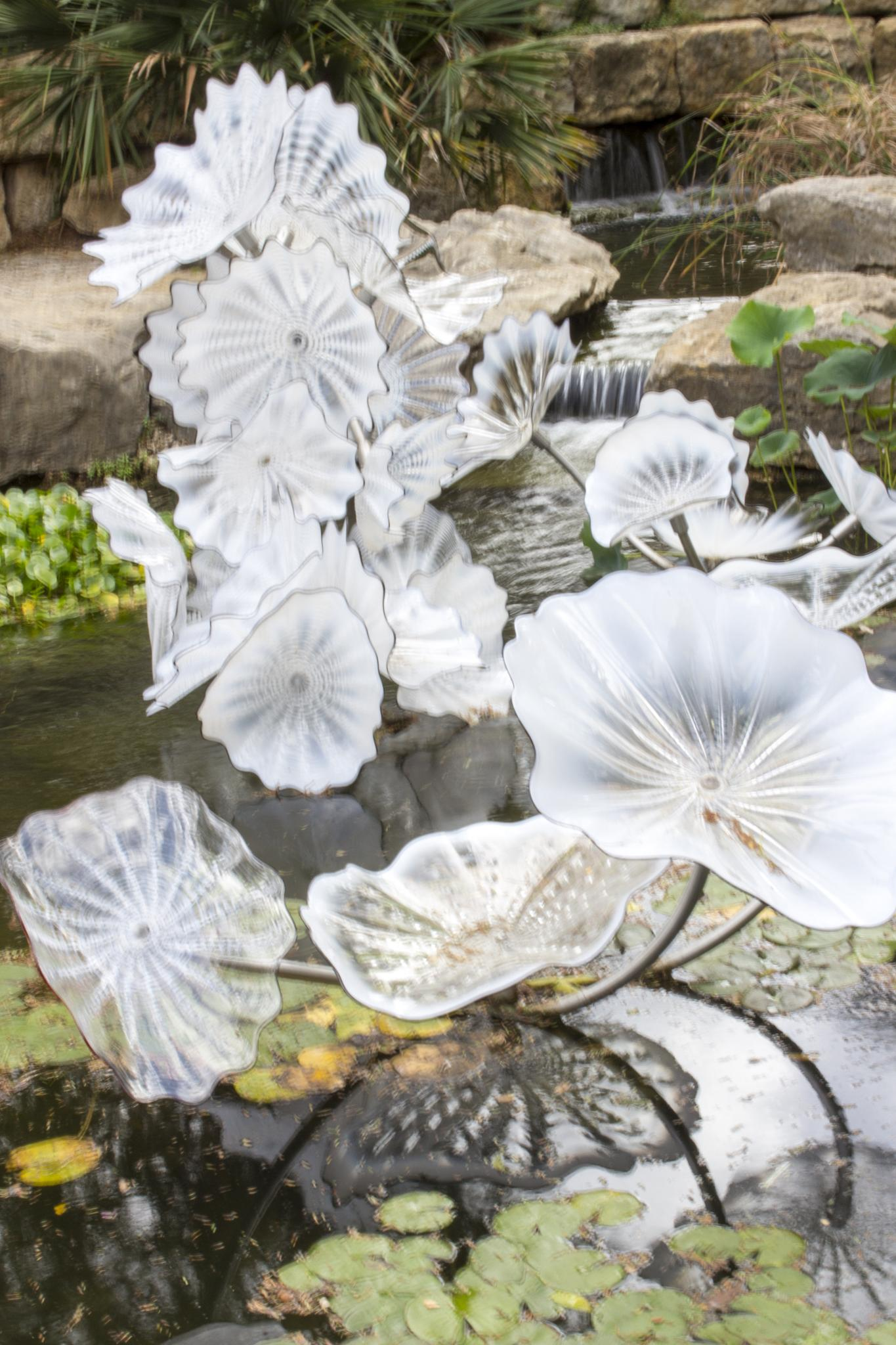 Dale Chihuly glass from 2012 in Dallas by steve house