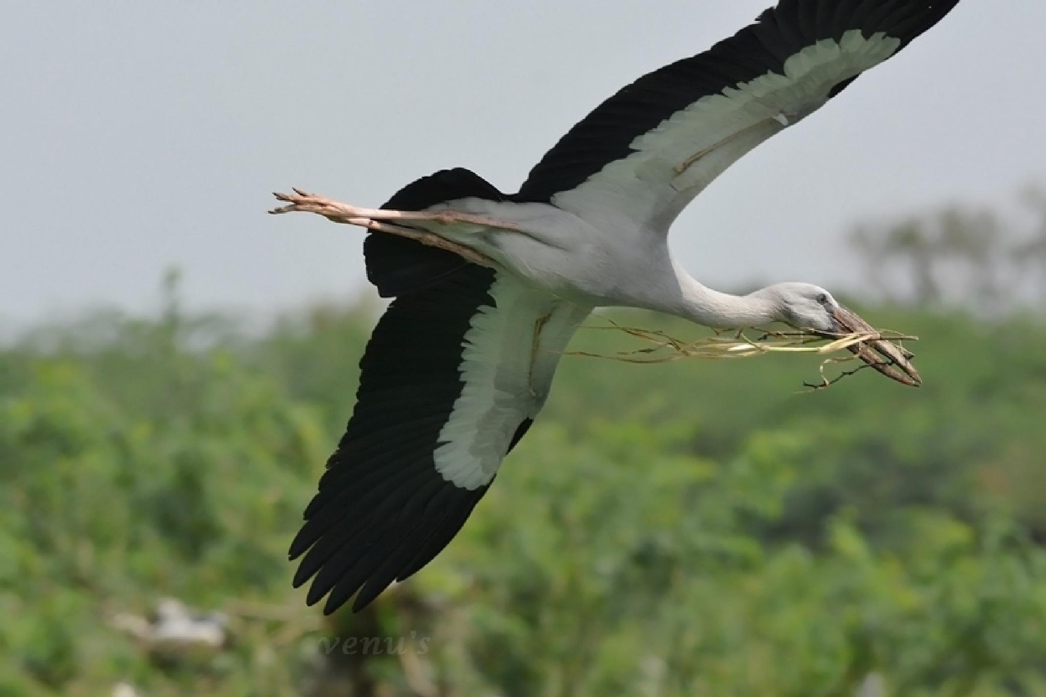Open bill Stork by venugopalbsnl