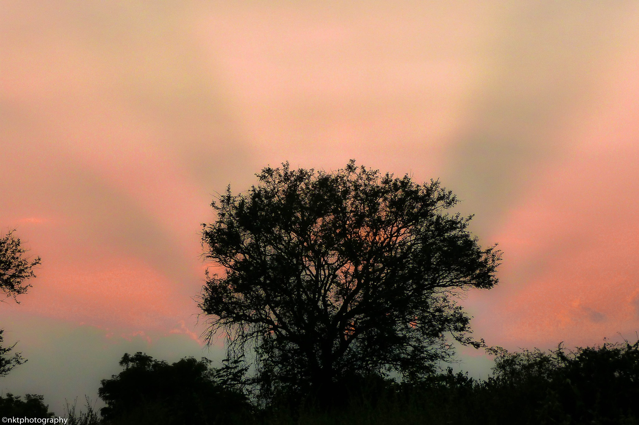On a fine evening by N. K. Teja