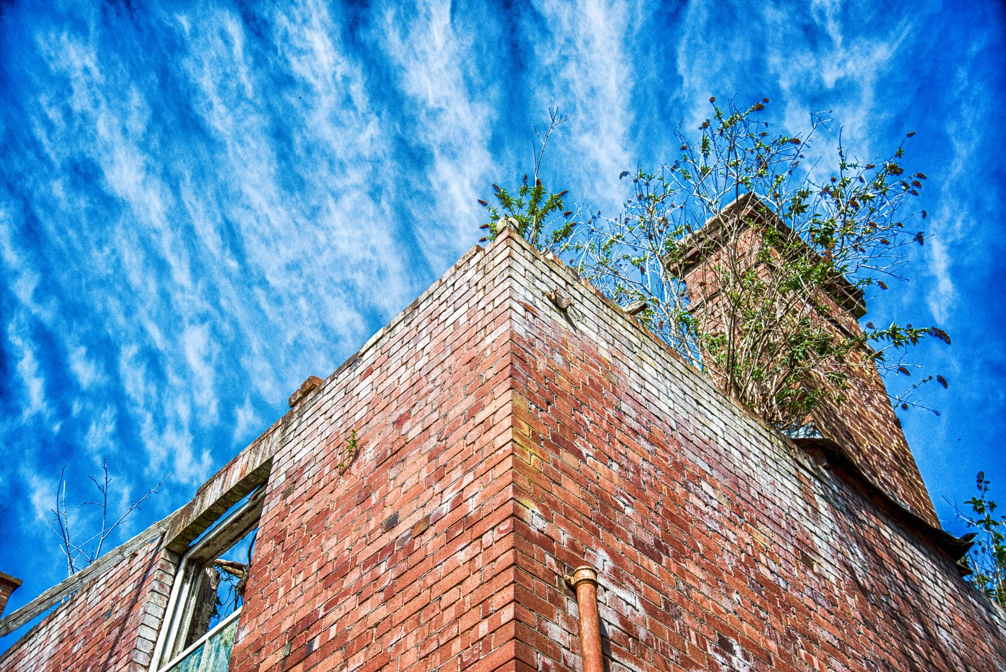 poltimore looking skywards by Hammond Photography
