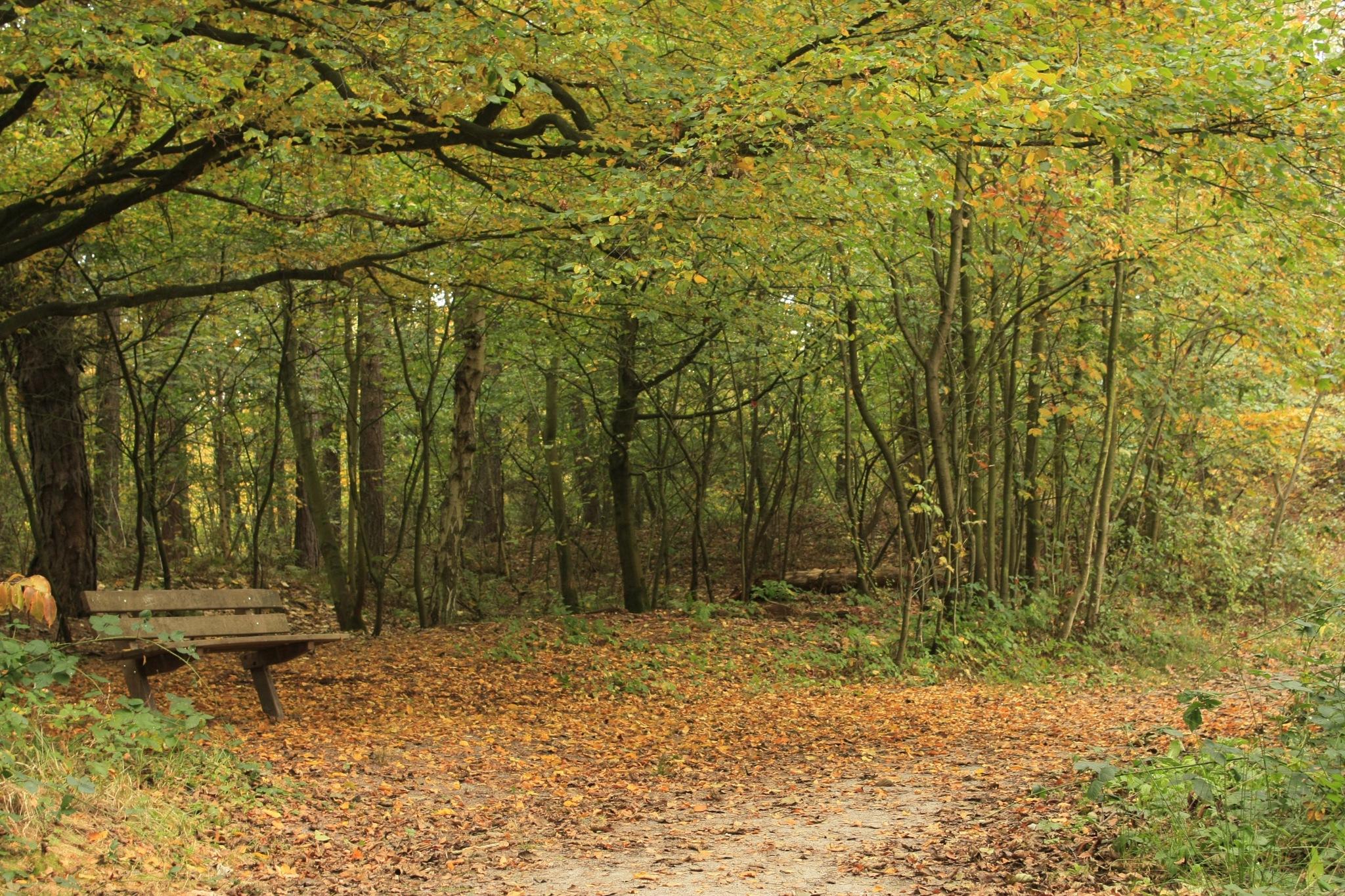 Autumn by adriaan.boender