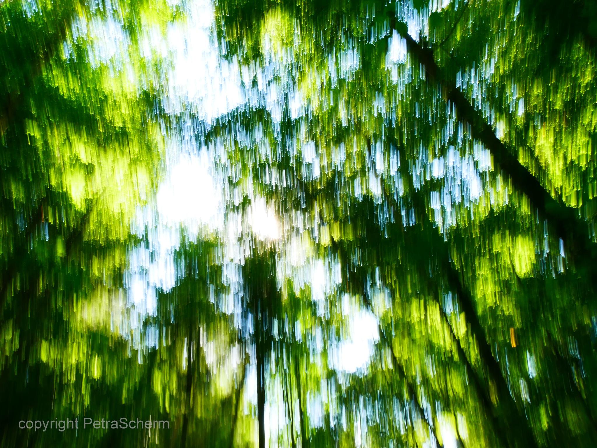 magical wood by PetraScherm