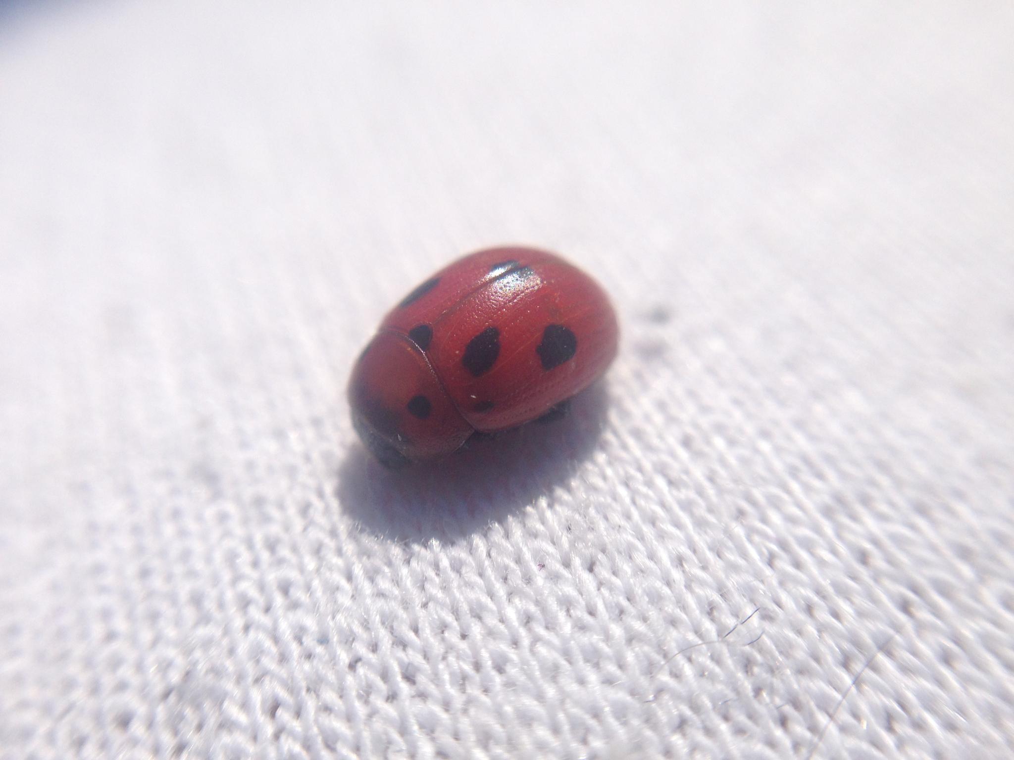 Ladybug  by MariusAndreas18