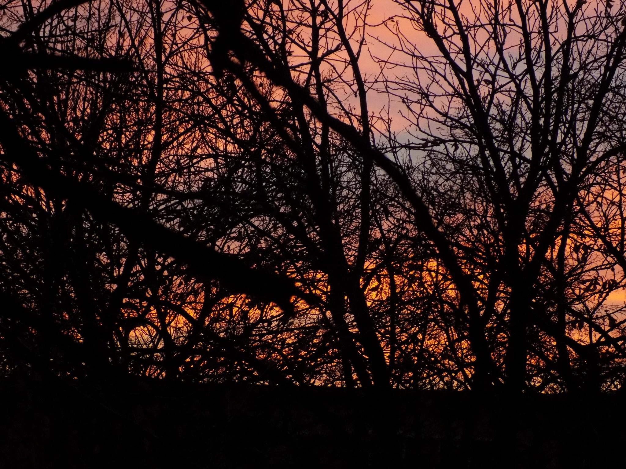 Golden hour by MariusAndreas18