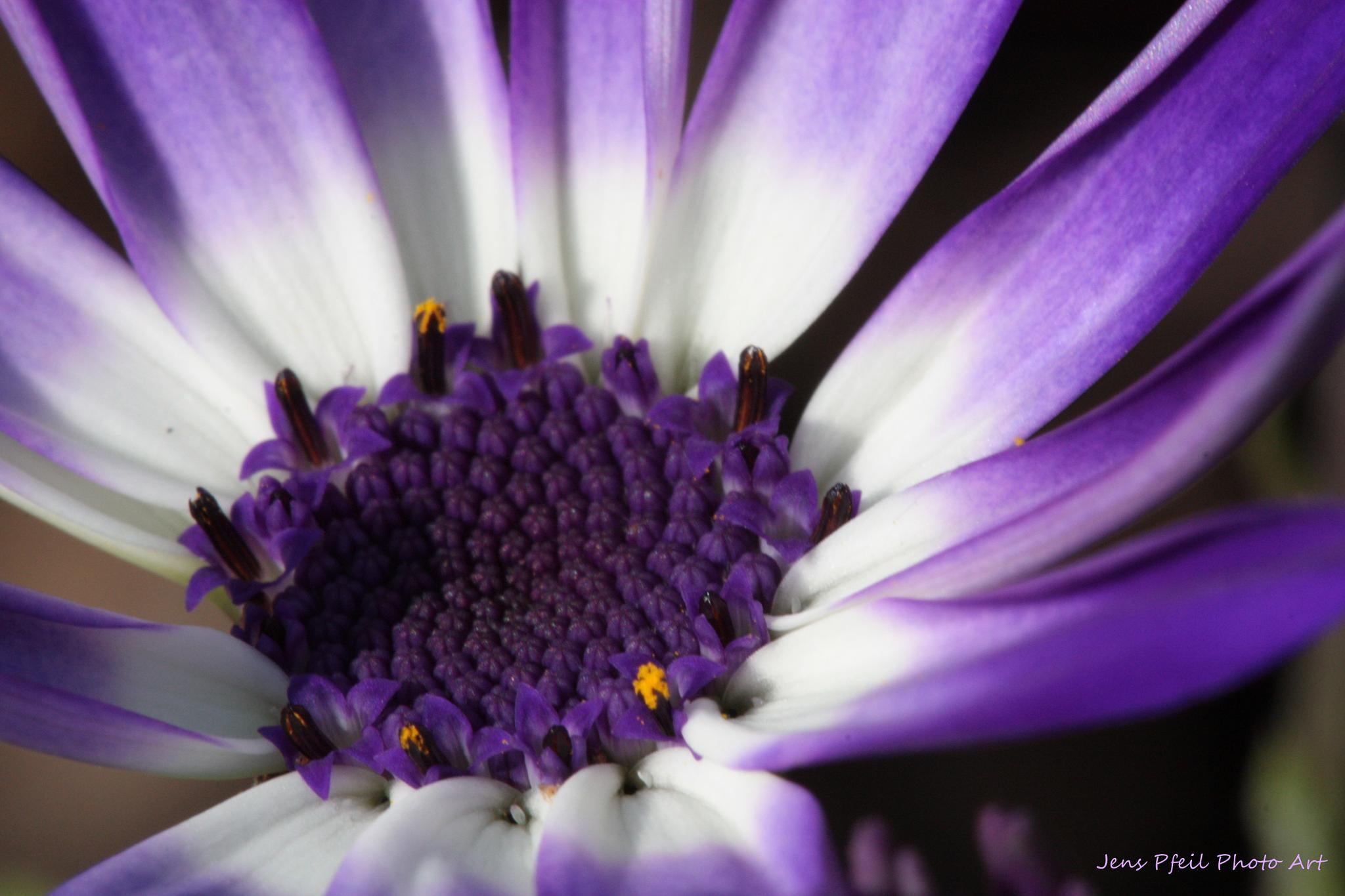 Violet Grace by papaje