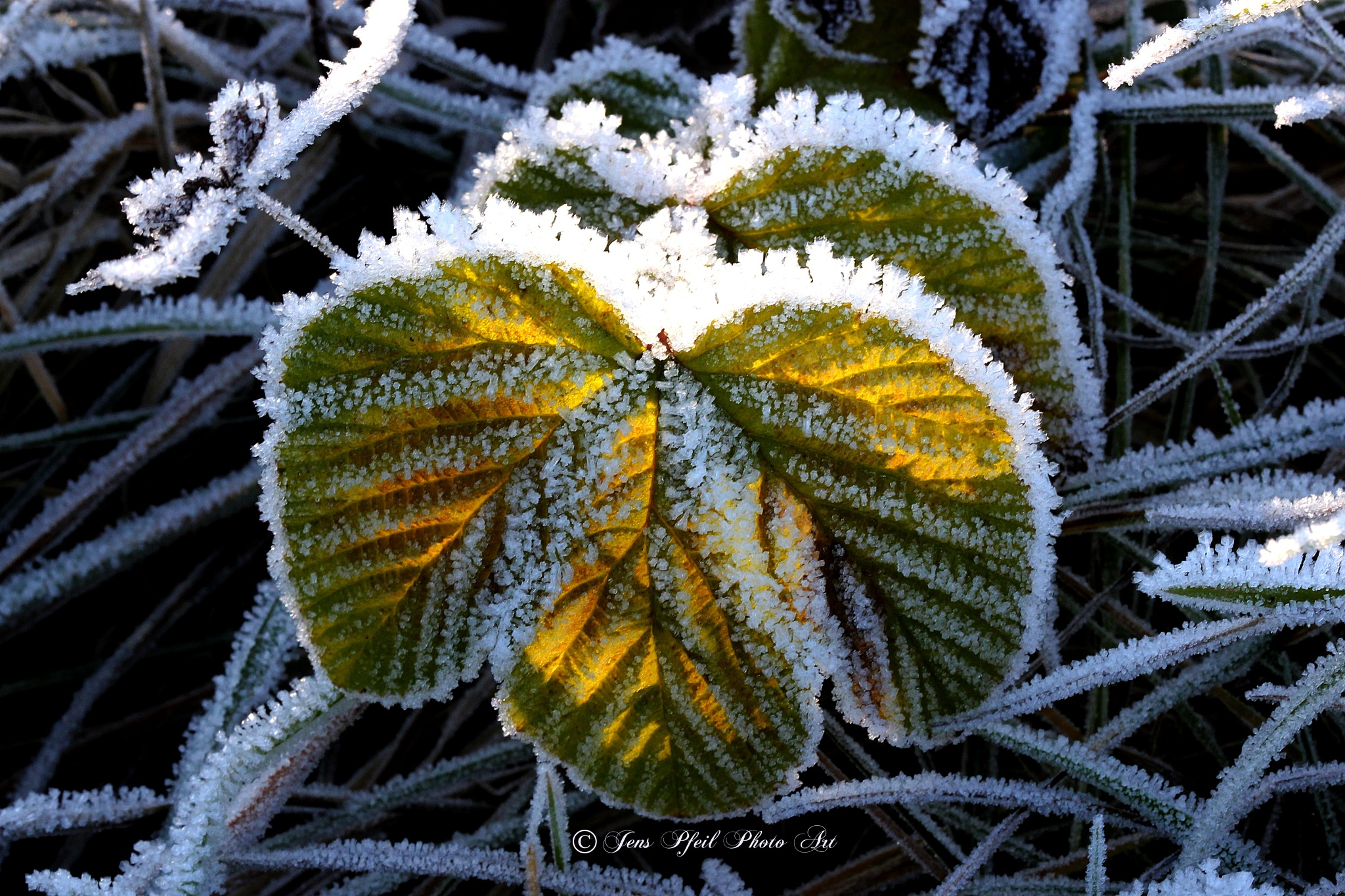 Frosted Leaf #2 by papaje