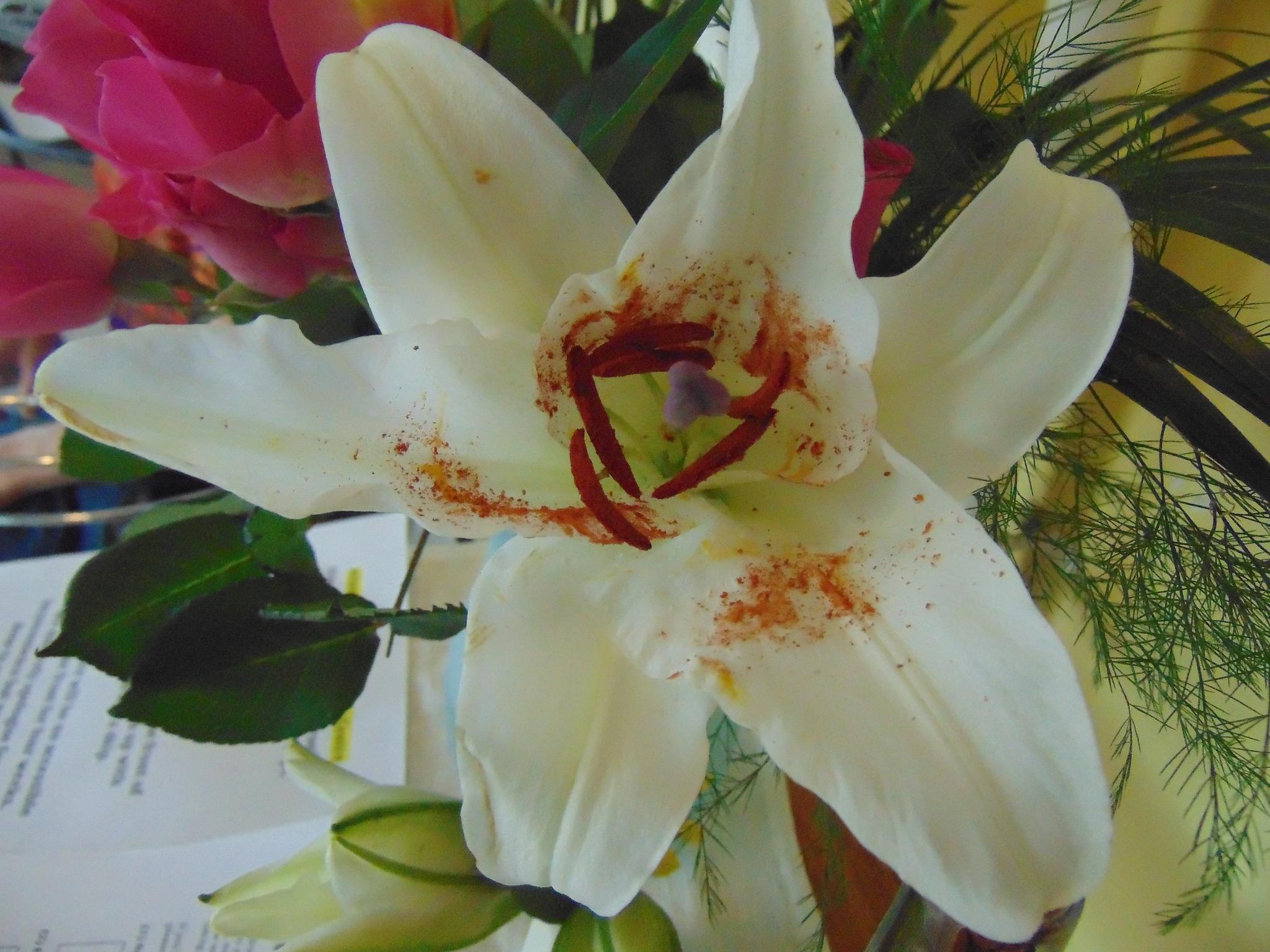 Lily by brian.f.kirkham