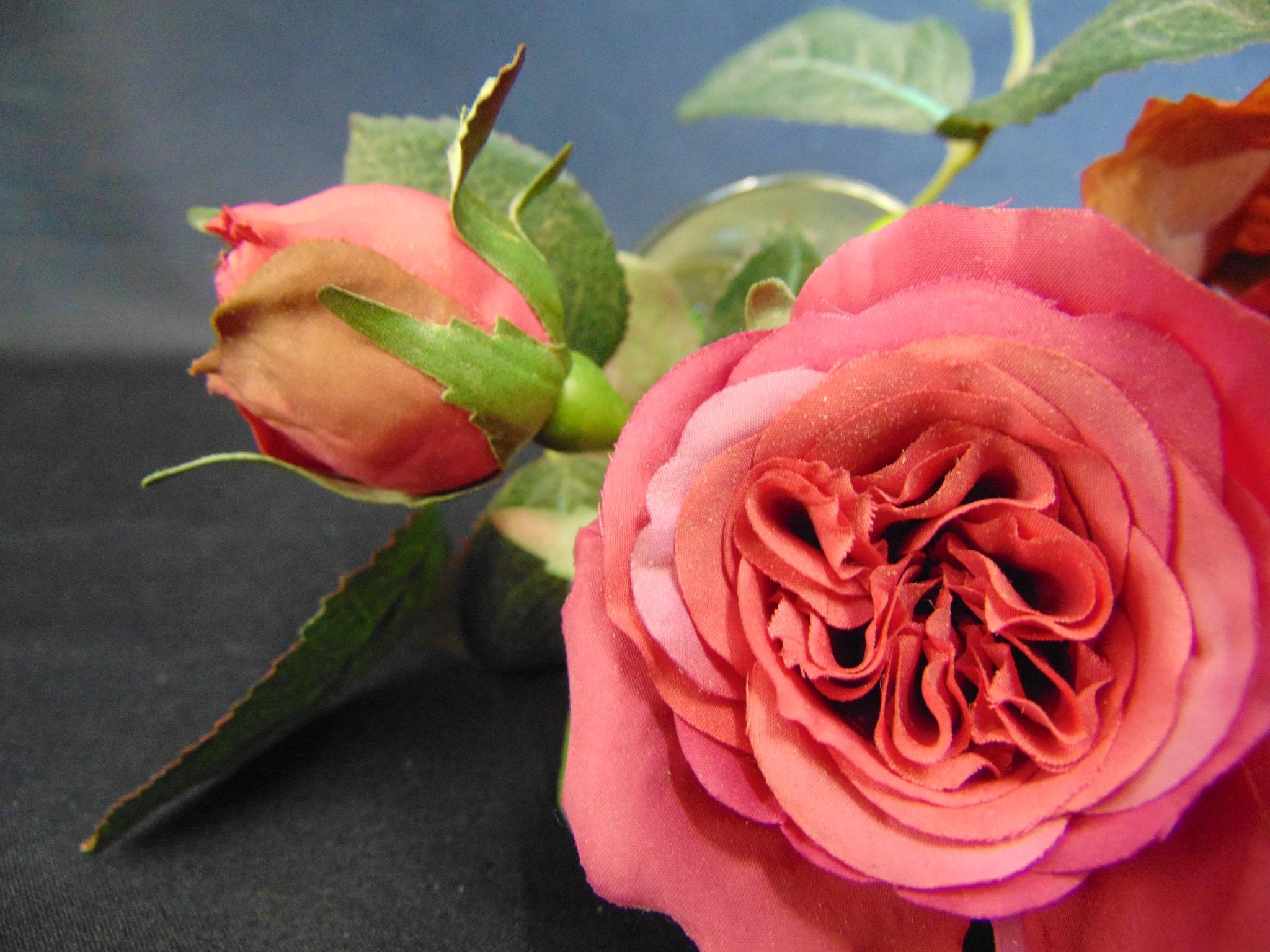 Pink Roses up Close by brian.f.kirkham